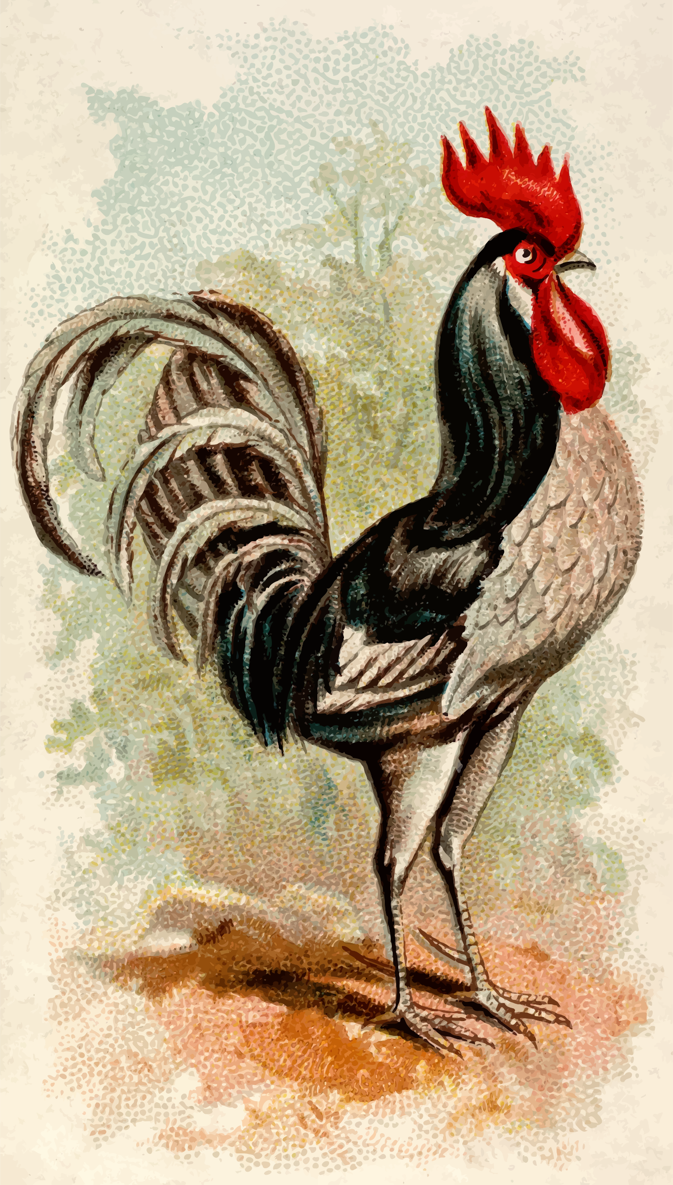 Cigarette card - Andalusian Cock by Firkin