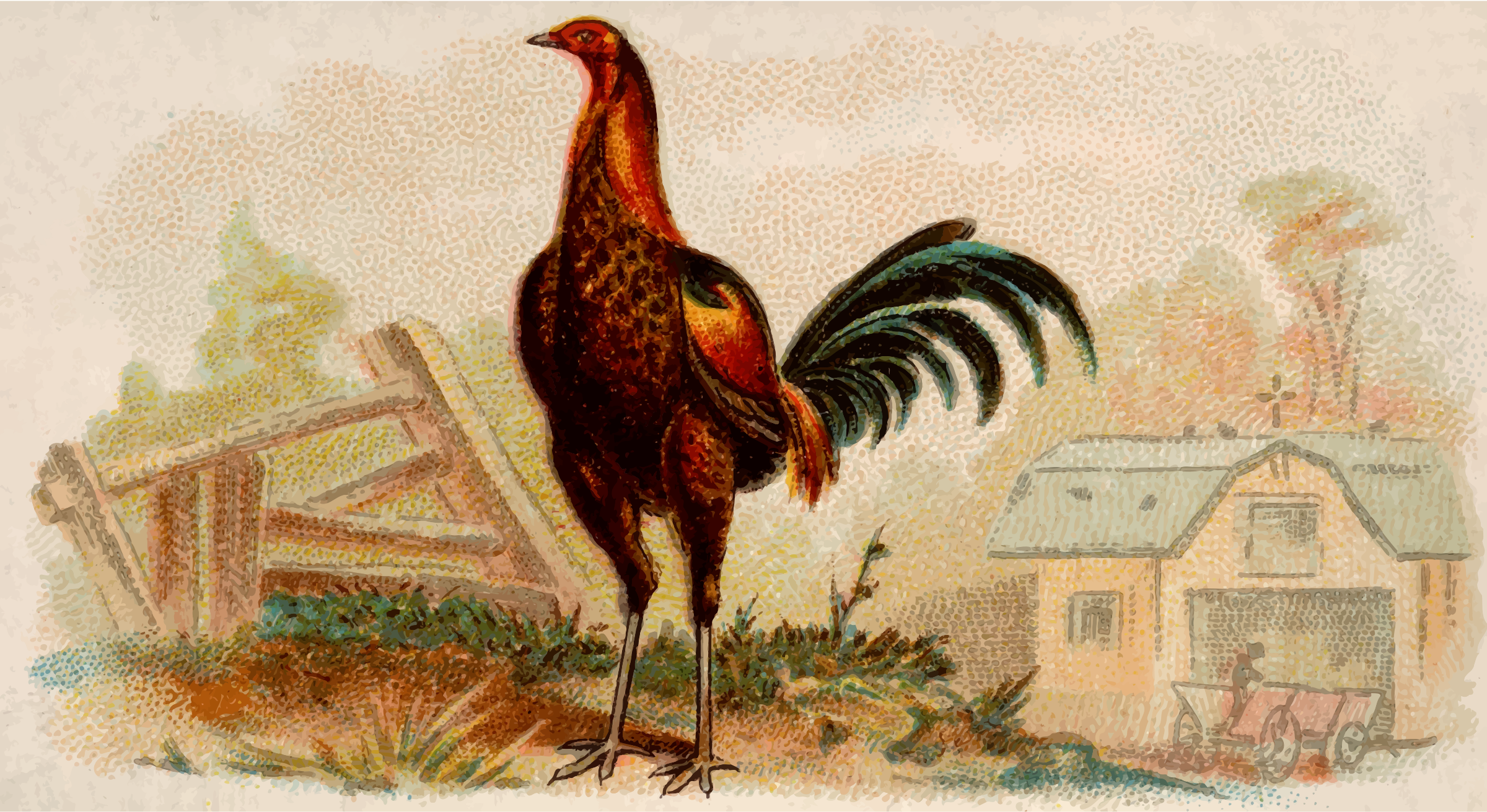 Cigarette card - Brown Breasted Red Game Cock by Firkin