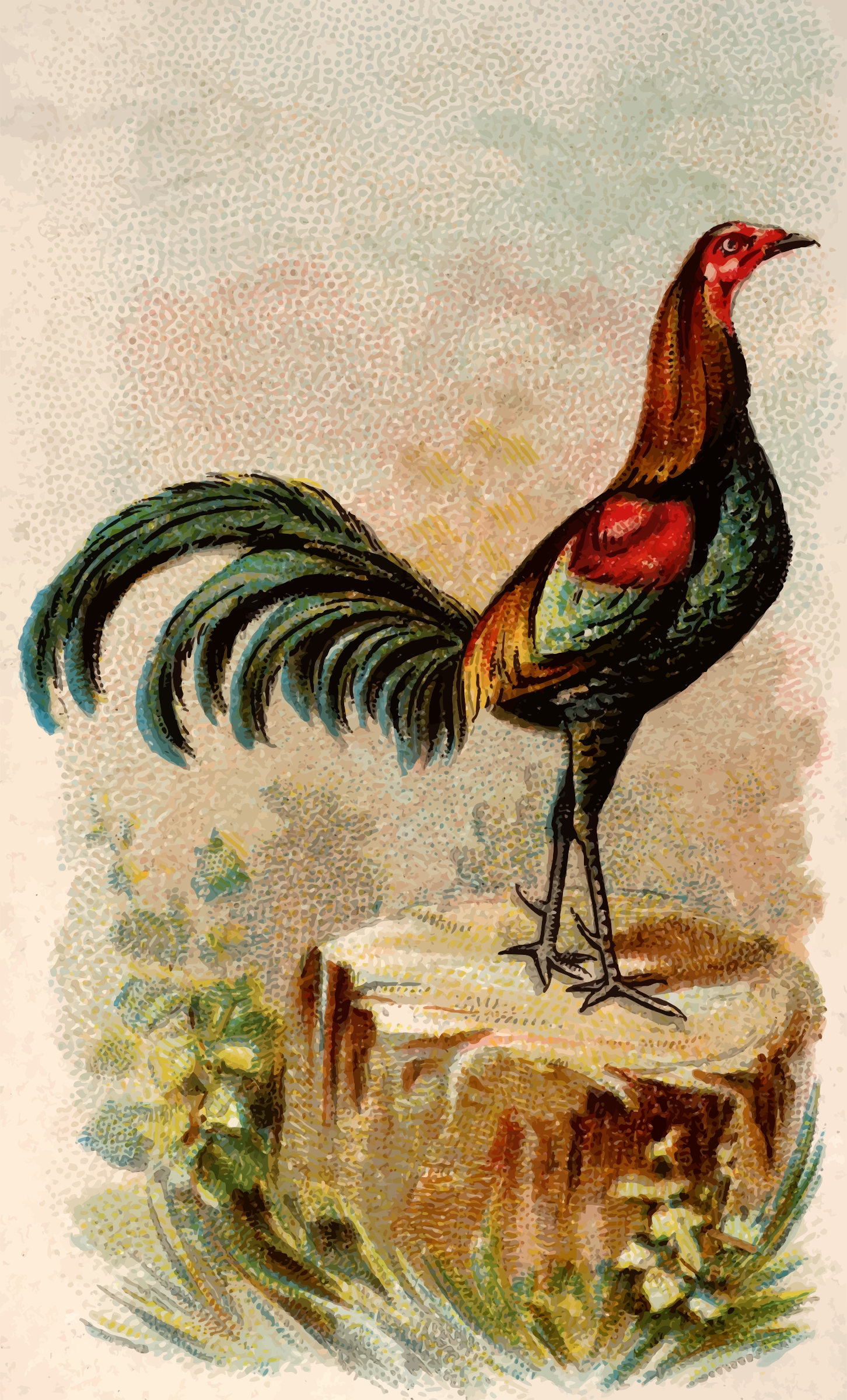 Cigarette card - Black Breasted Red Game Cock by Firkin