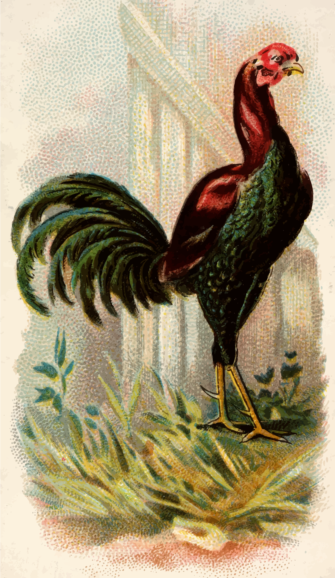 Cigarette card - Malay Cock by Firkin