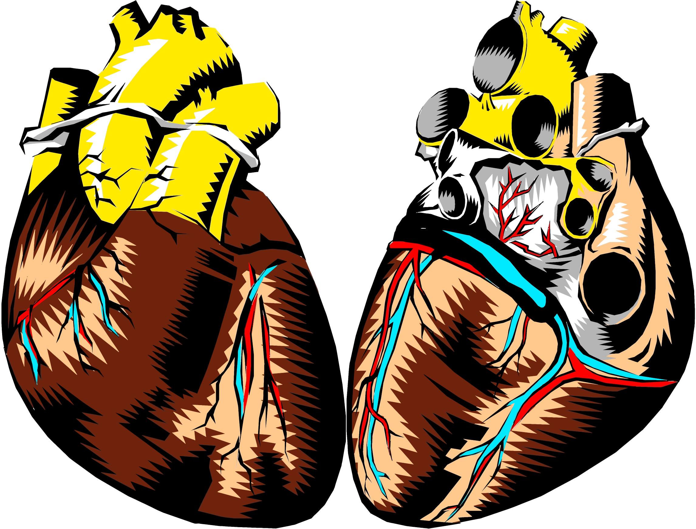 Heart Cross Section Illustration by GDJ
