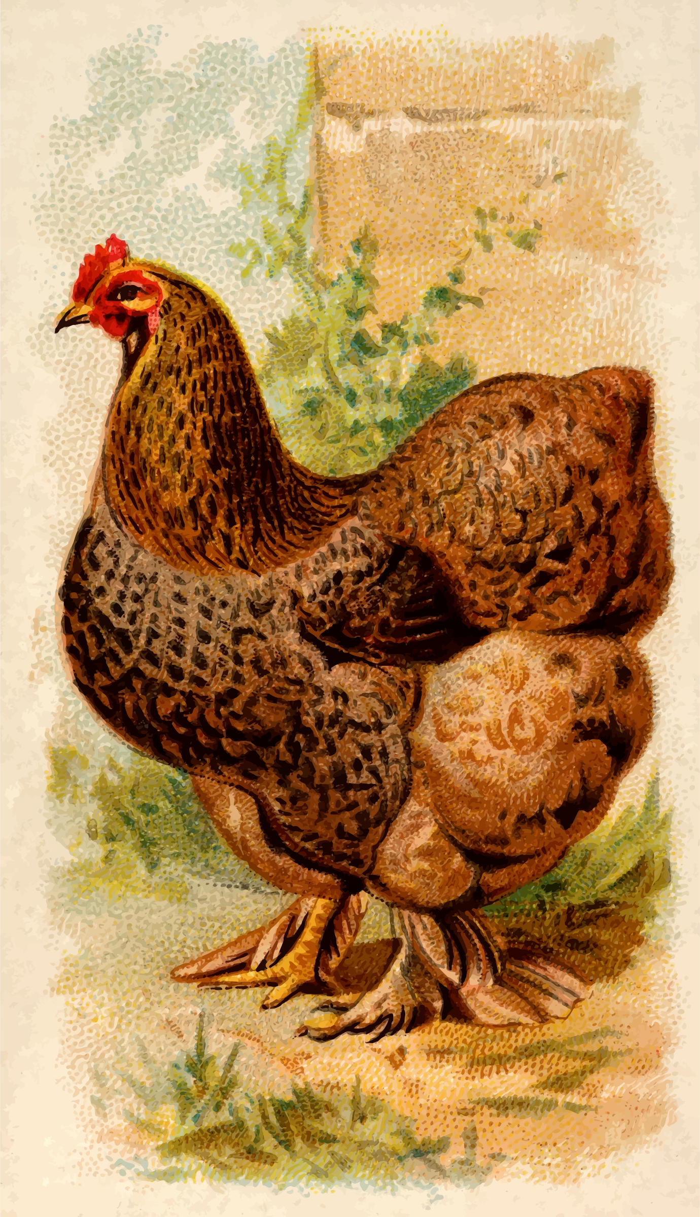 Cigarette card - Partridge Cochin Hen by Firkin