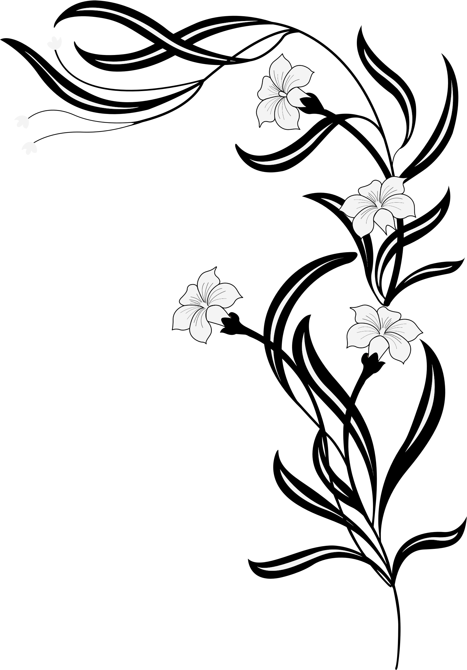 Black And White Flowers by GDJ