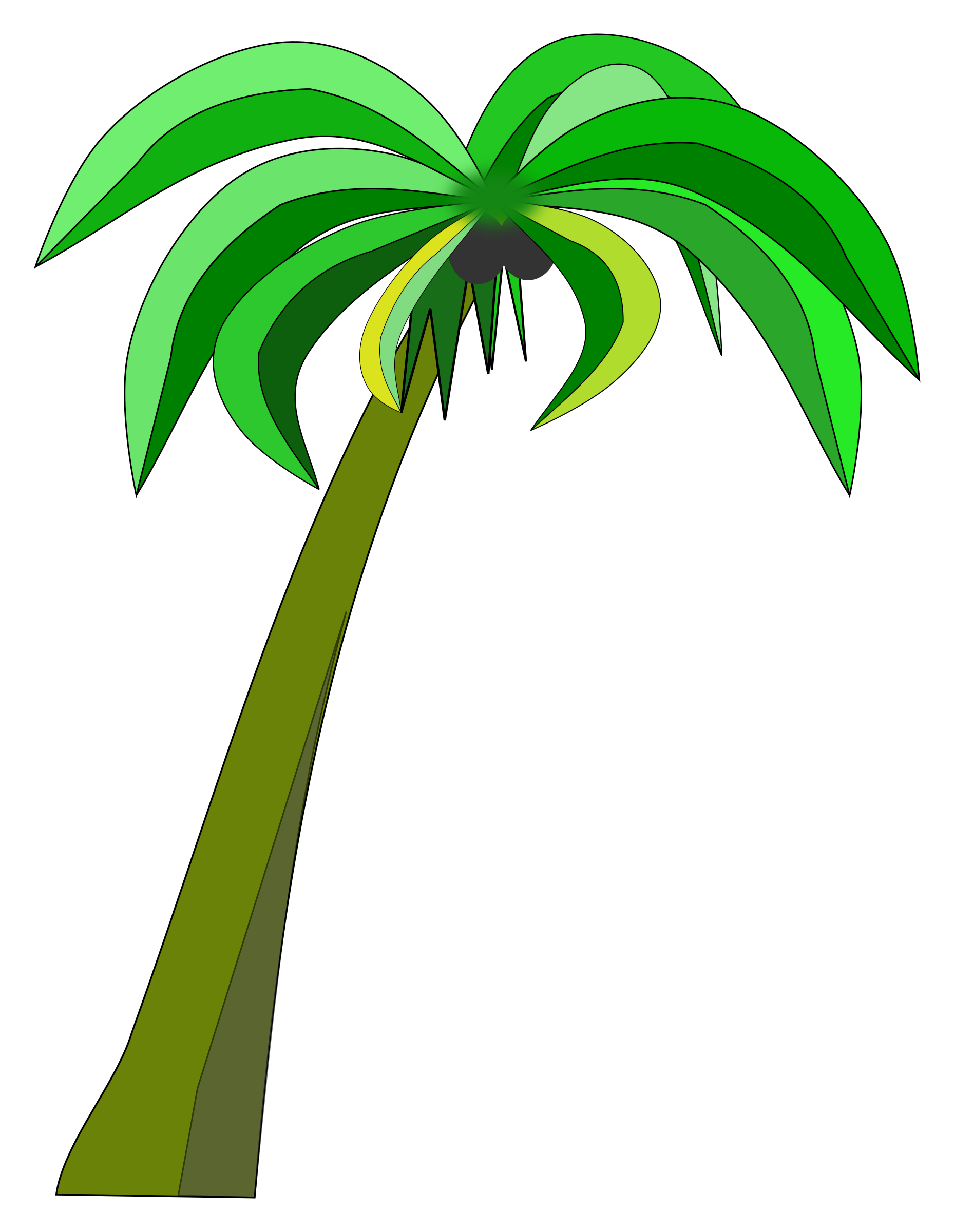 Palm or Coconut Tree by davidblyons