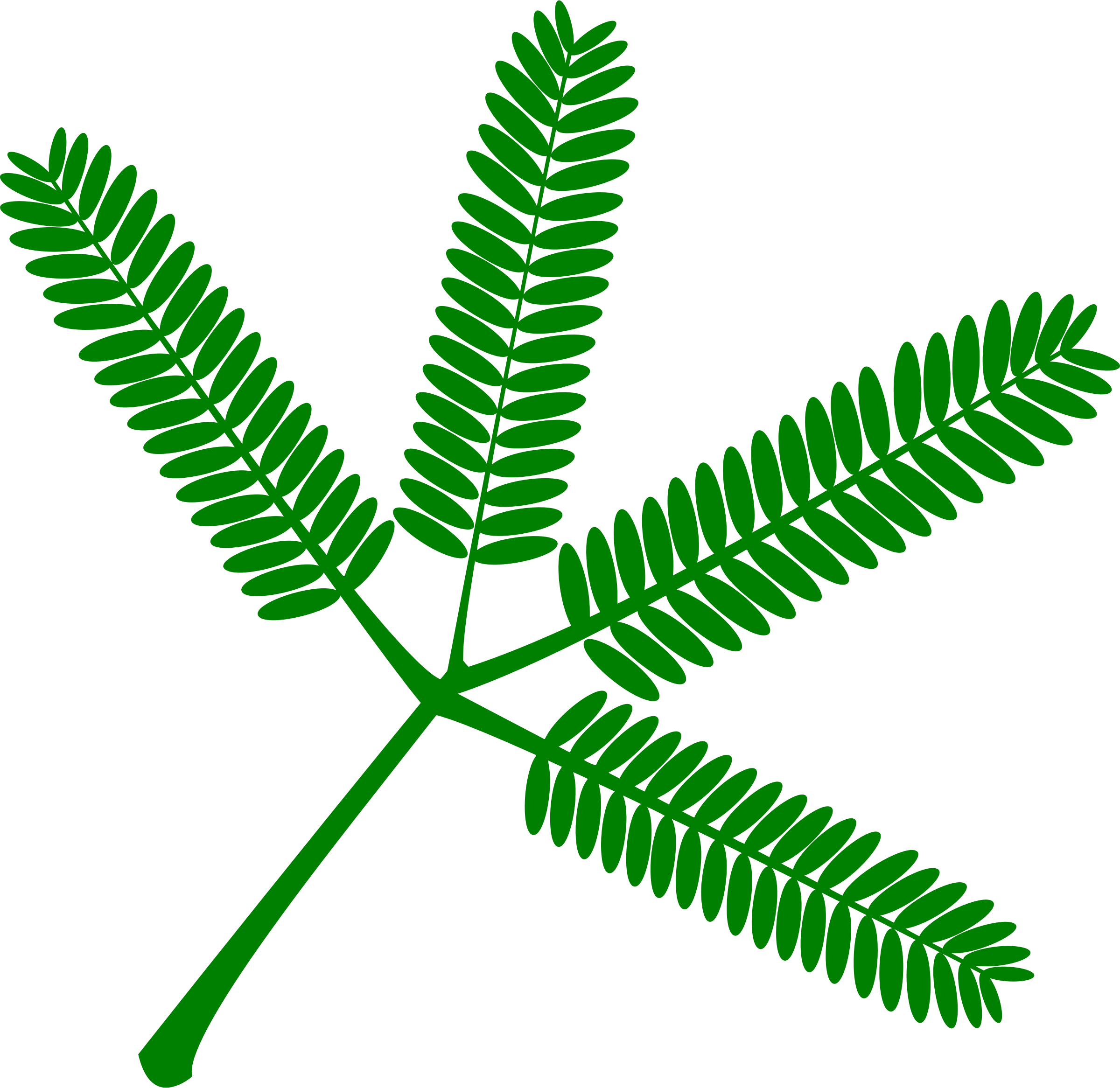 Mimosa vectorized by Firkin