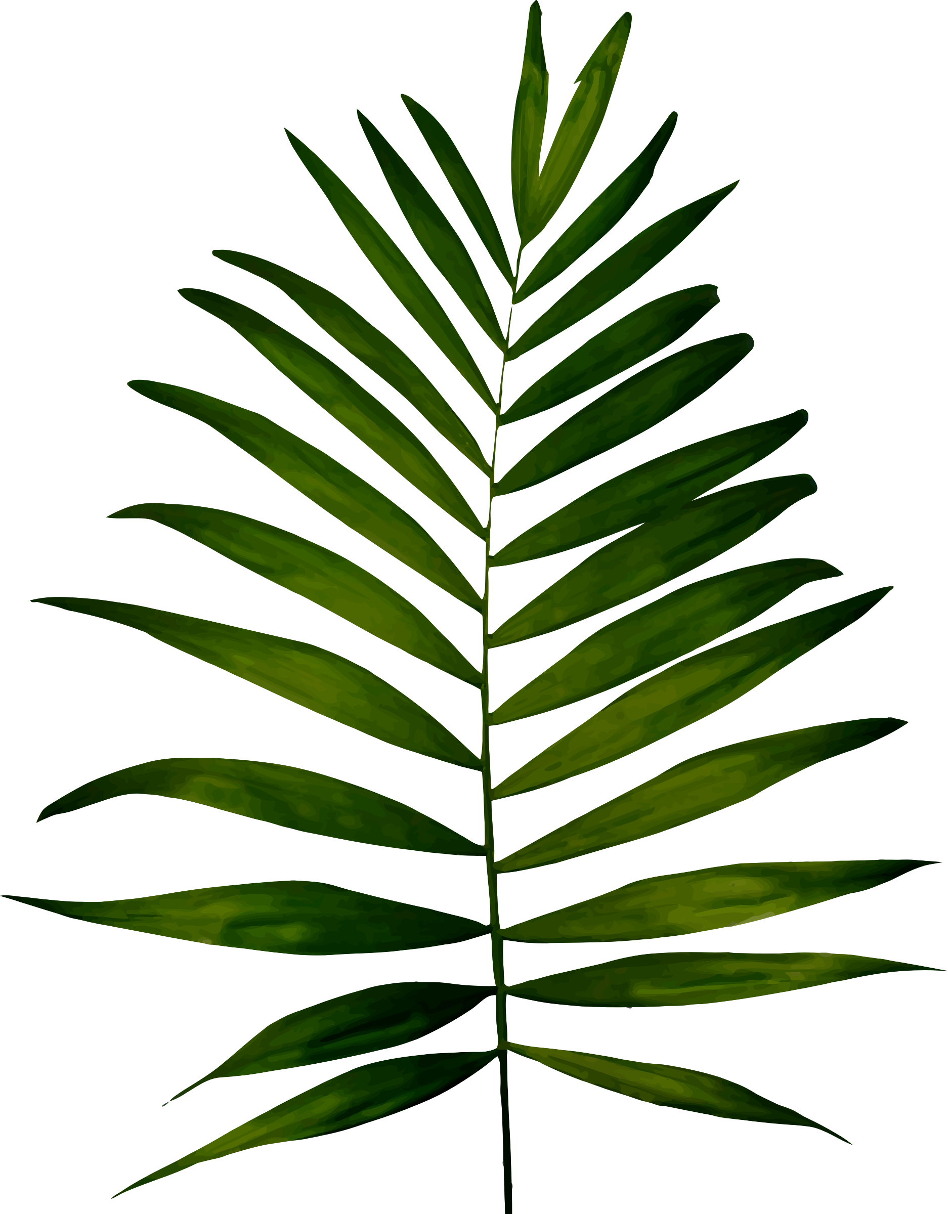 Fern 2 by Firkin