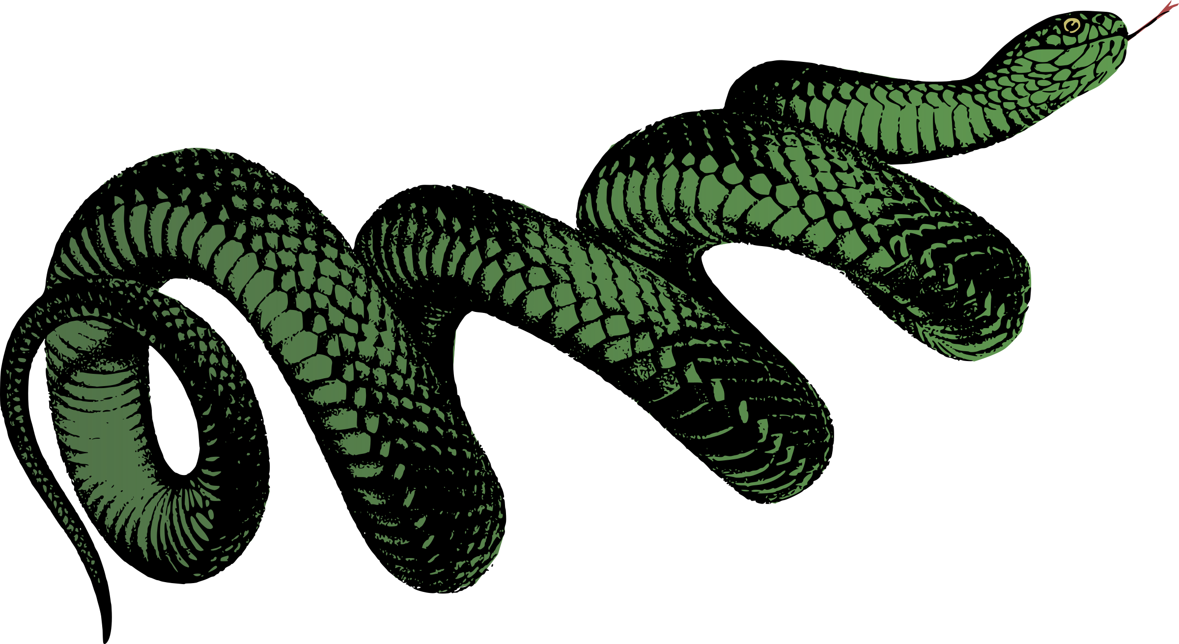 Coiled Snake - Colour by j4p4n
