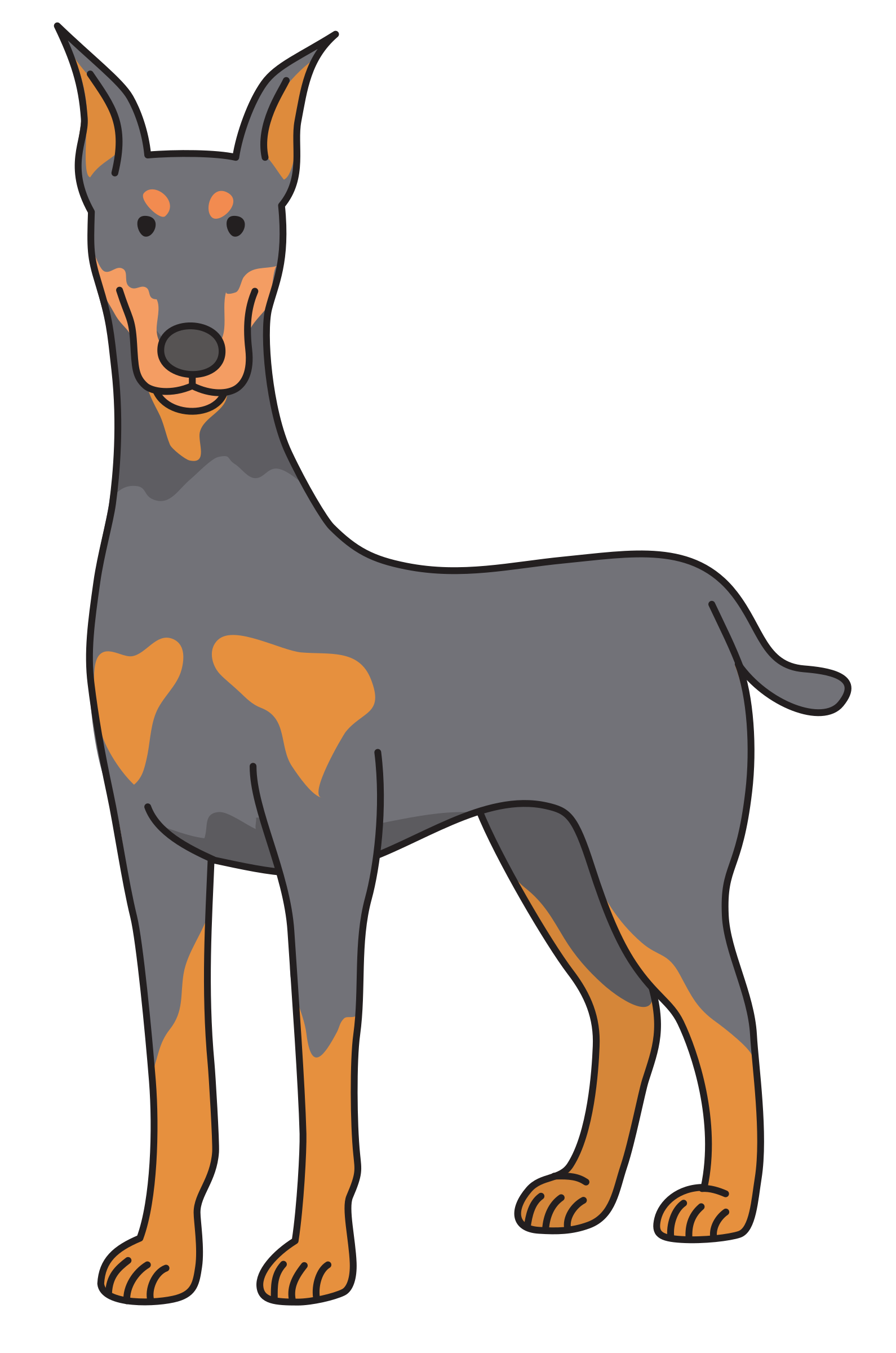 dog - Doberman by Juhele