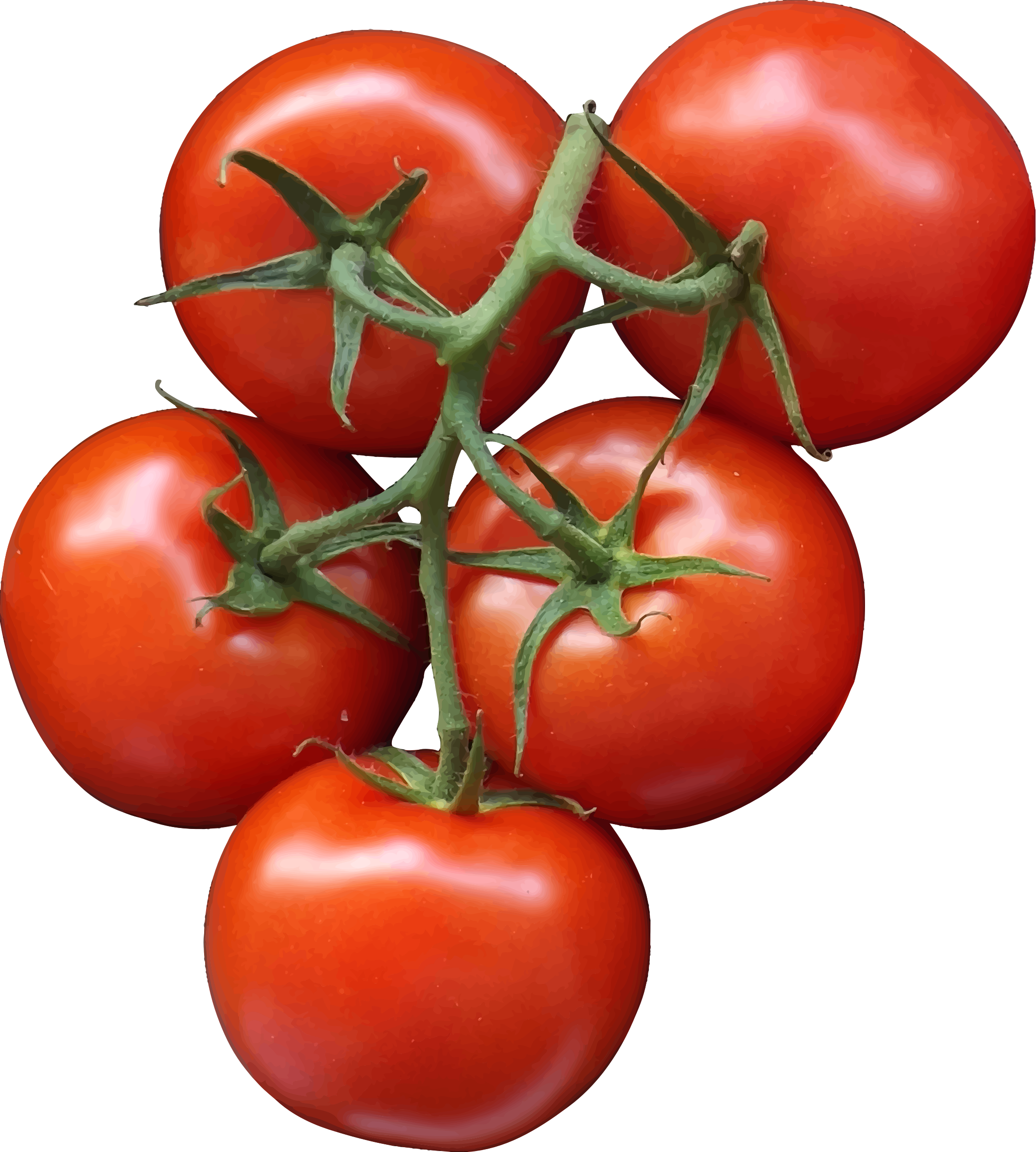 Tomatoes by Firkin