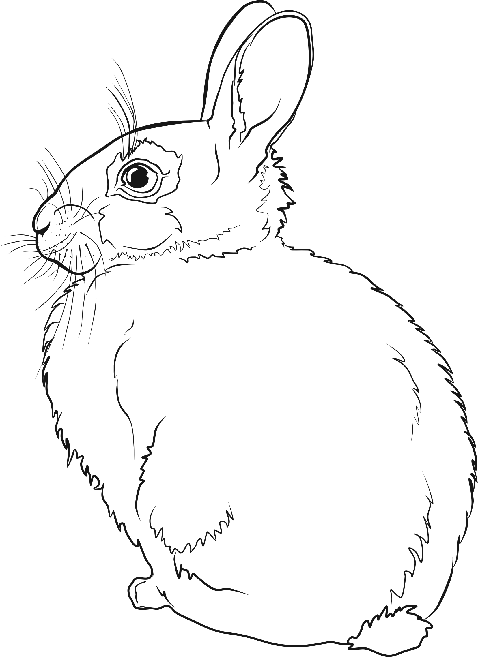 Rabbit Line Art by GDJ