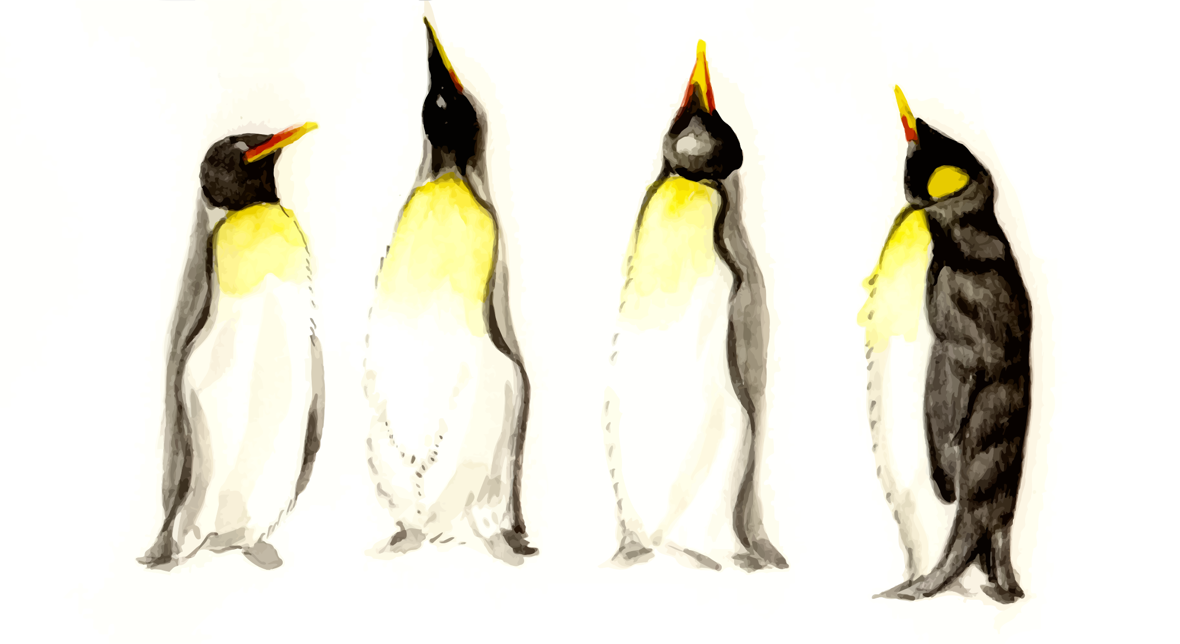 cristieleung's Penguins vectorised by Firkin