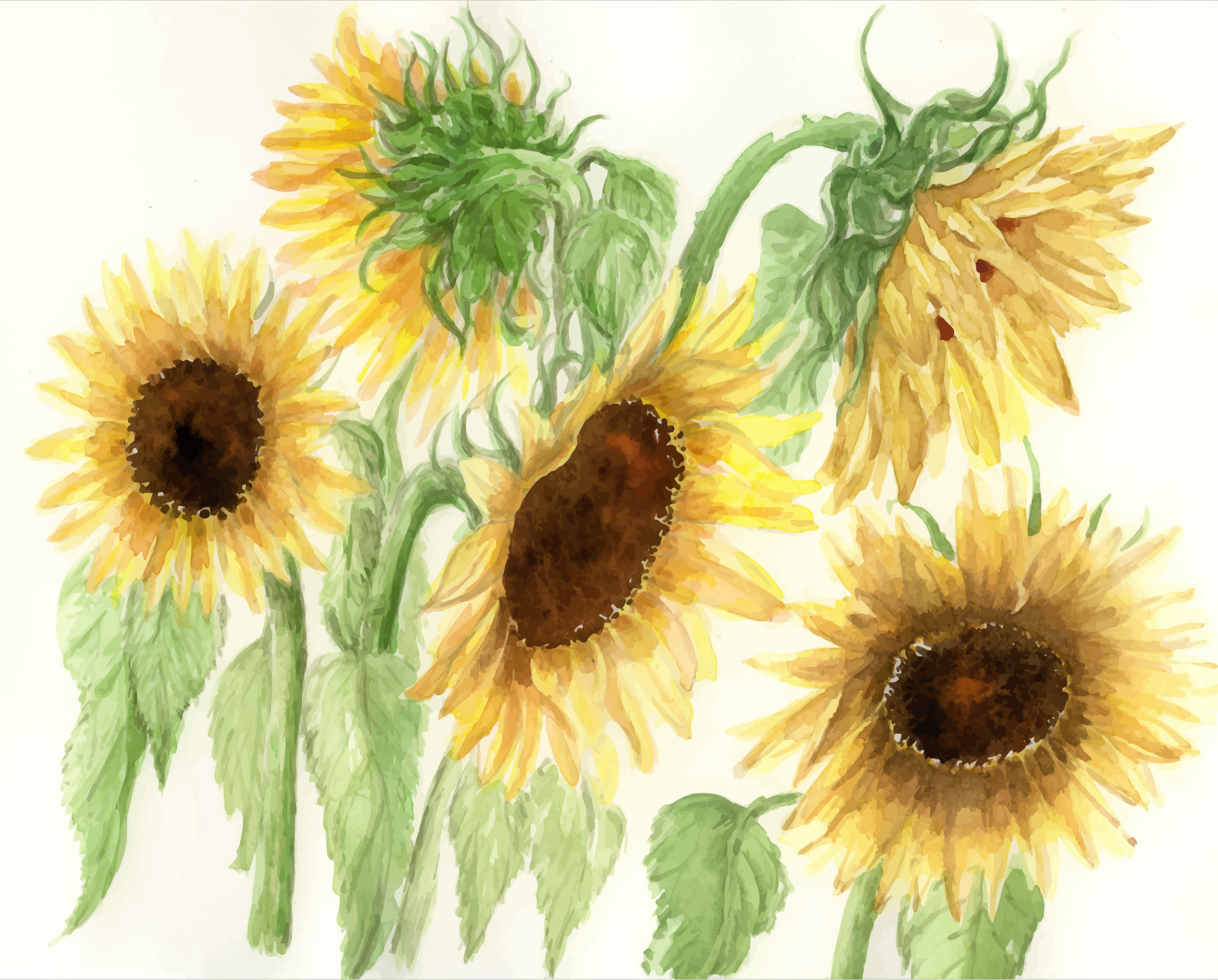 cristieleung's Sunflowers vectorised by Firkin