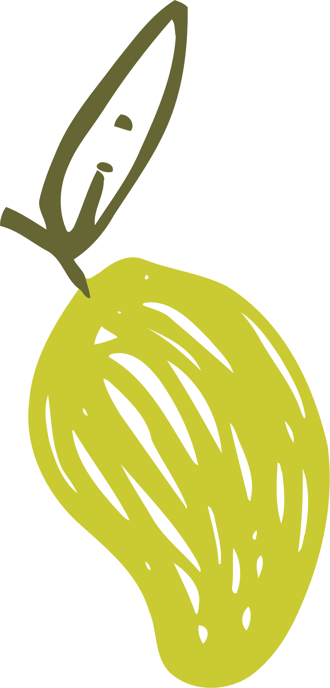 Sketched pear by Firkin