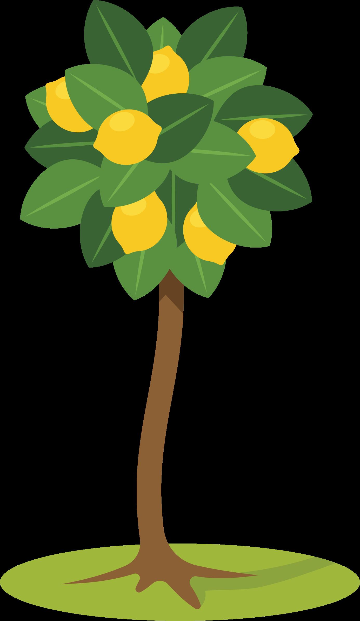 clipart lemon tree tree vector plan tree vector art