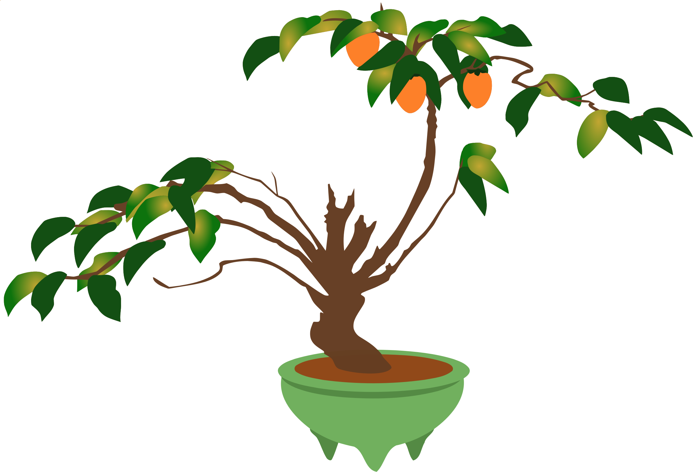 Persimmon bonsai tree by Firkin