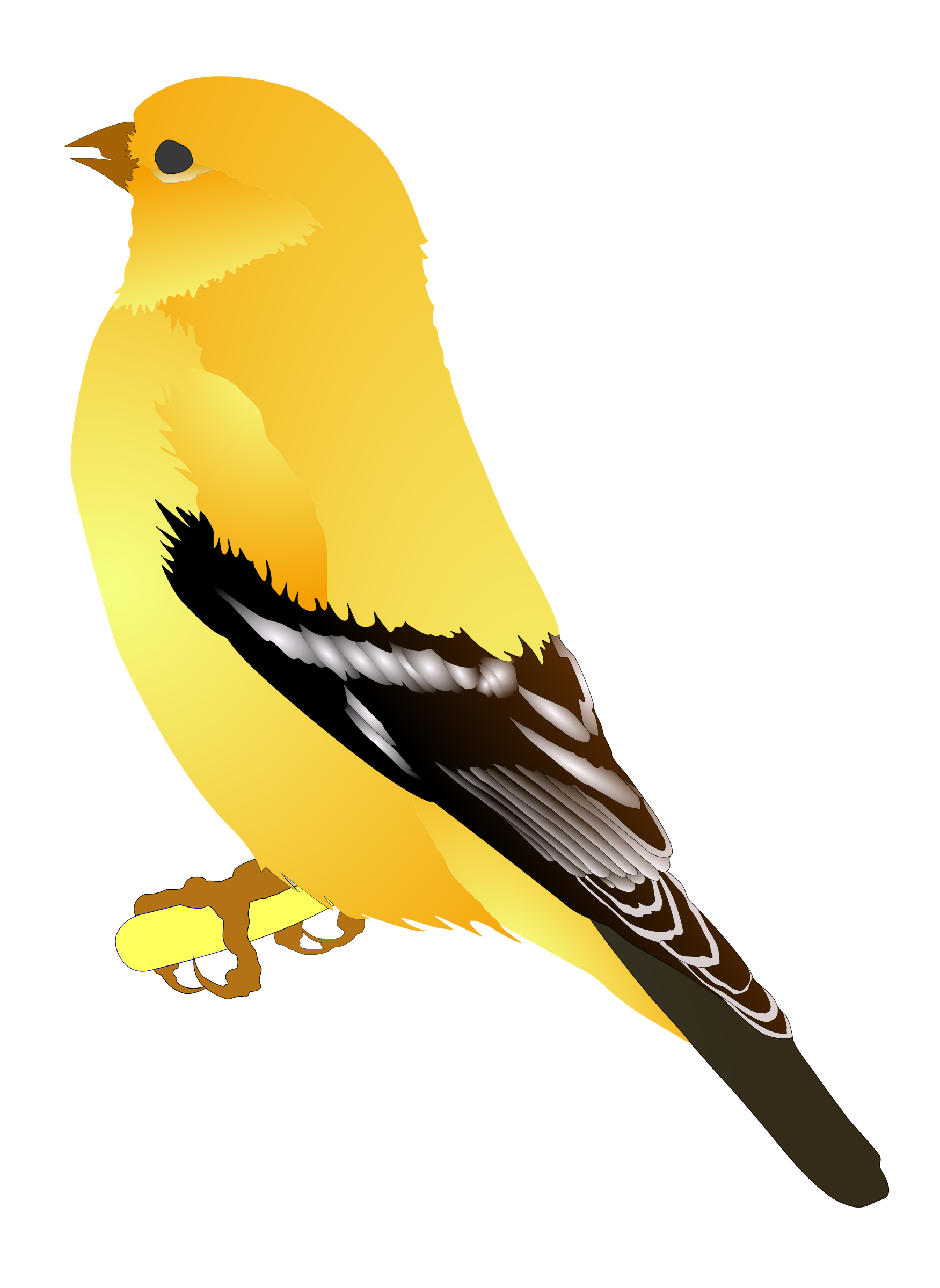 Gold Finch by MichowwTru