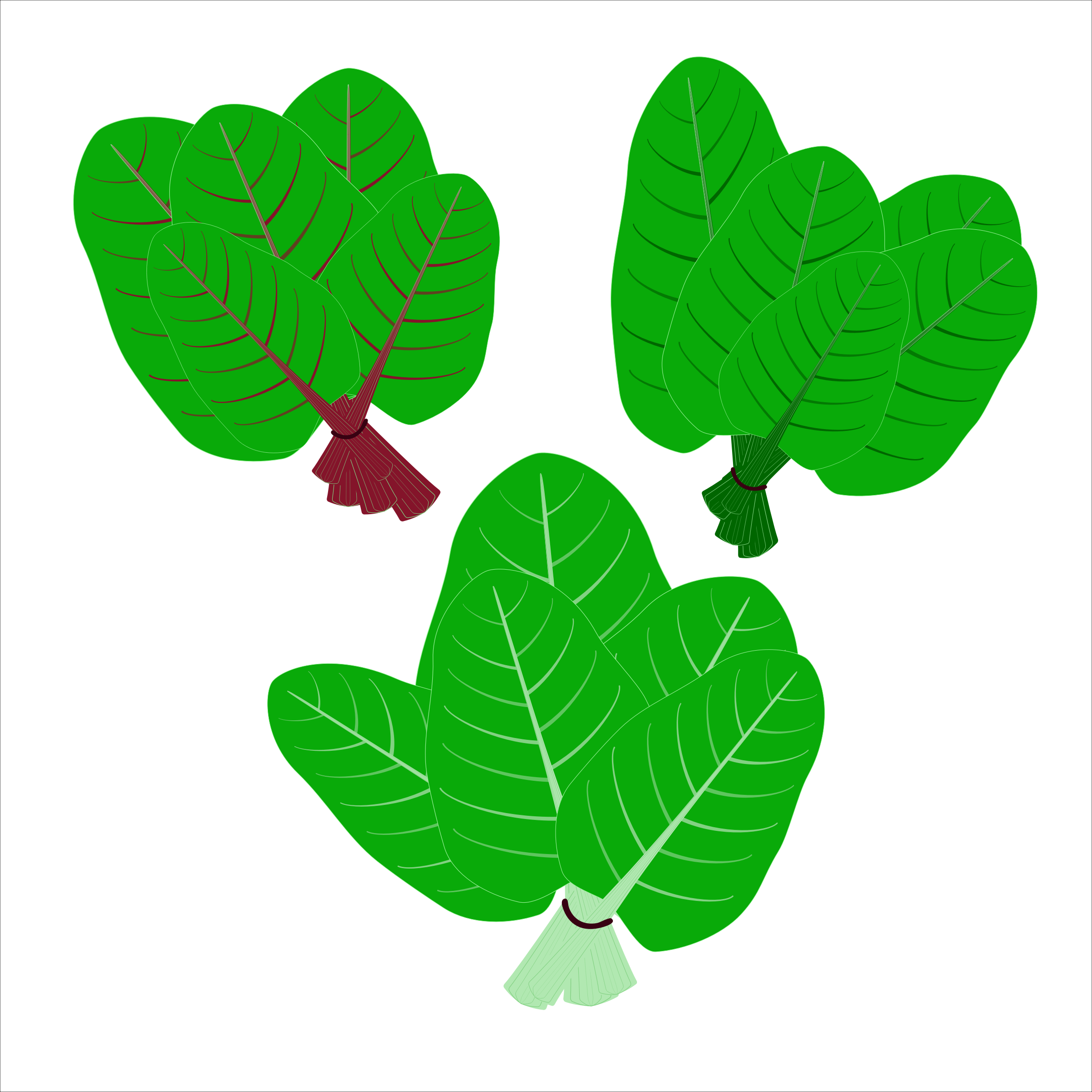 Flat vector icons. Leafy green vegetable.Organic and healty food by gogohop