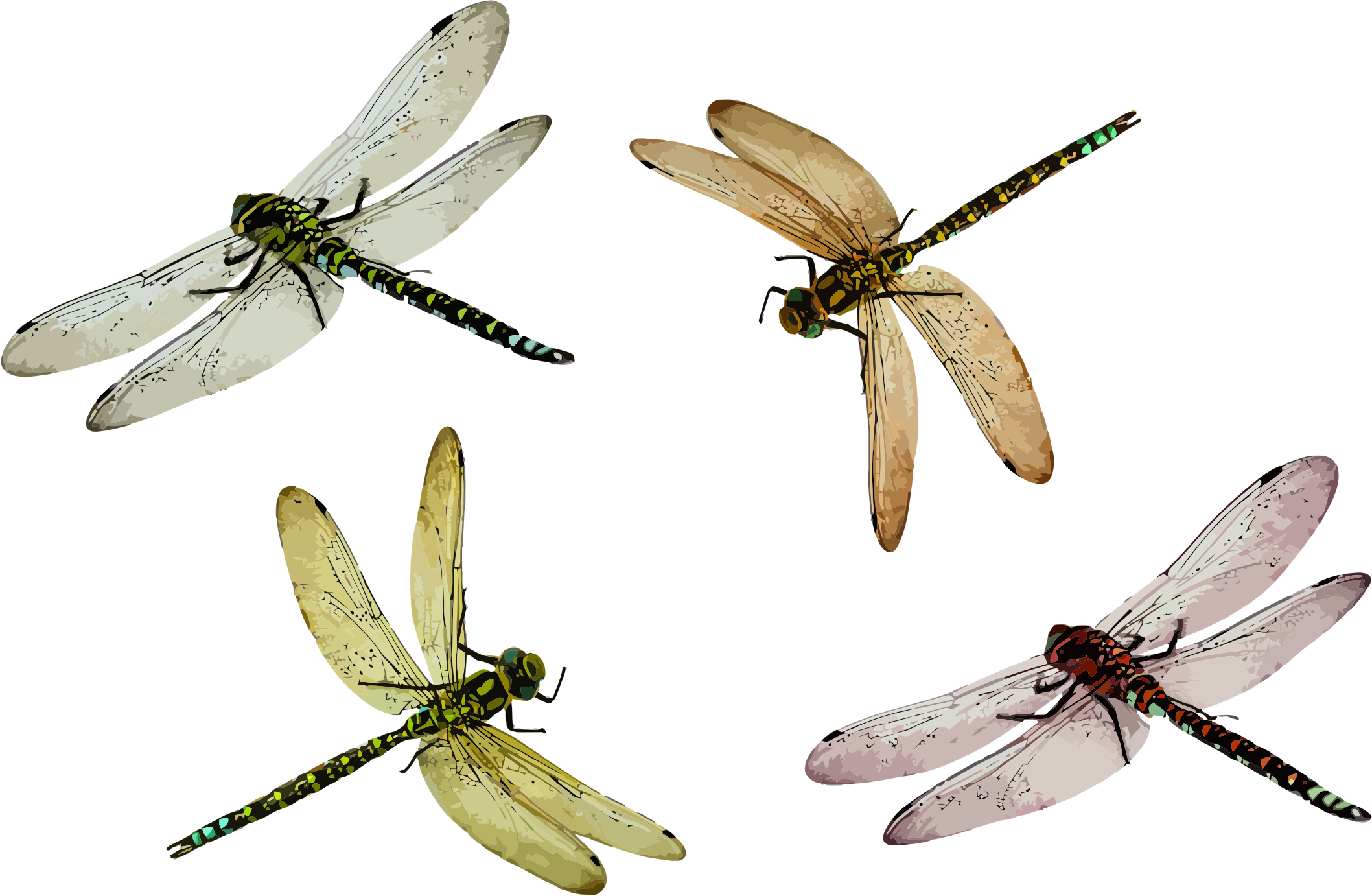4 dragonflies by mcc