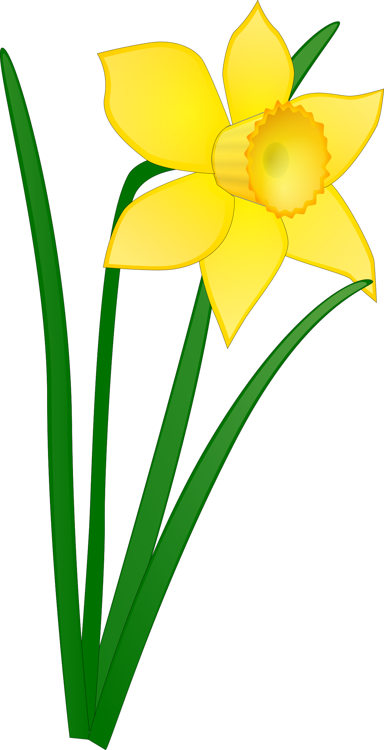 Daffodil by Anonymous