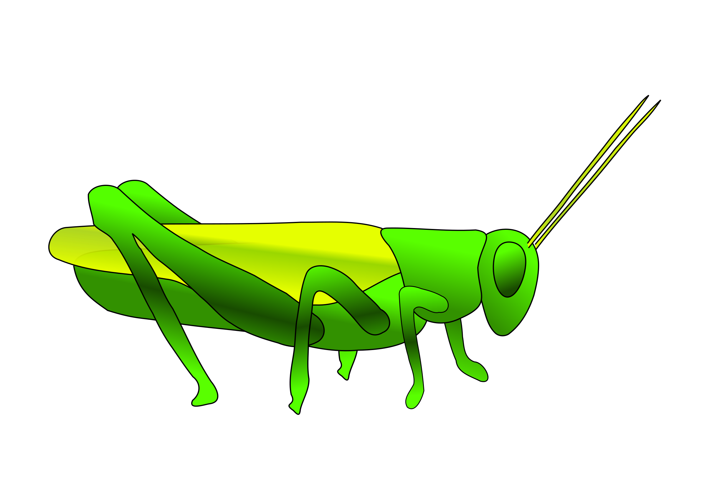 Grasshopper by Jonathon