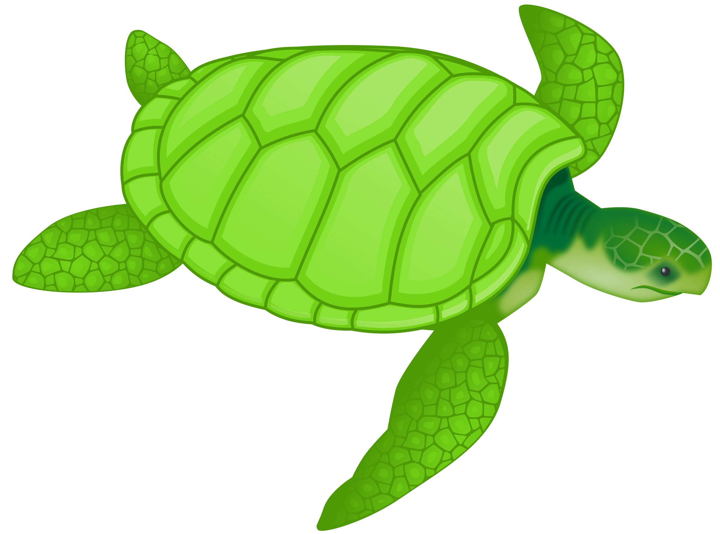 Green sea turtle by valessiobrito