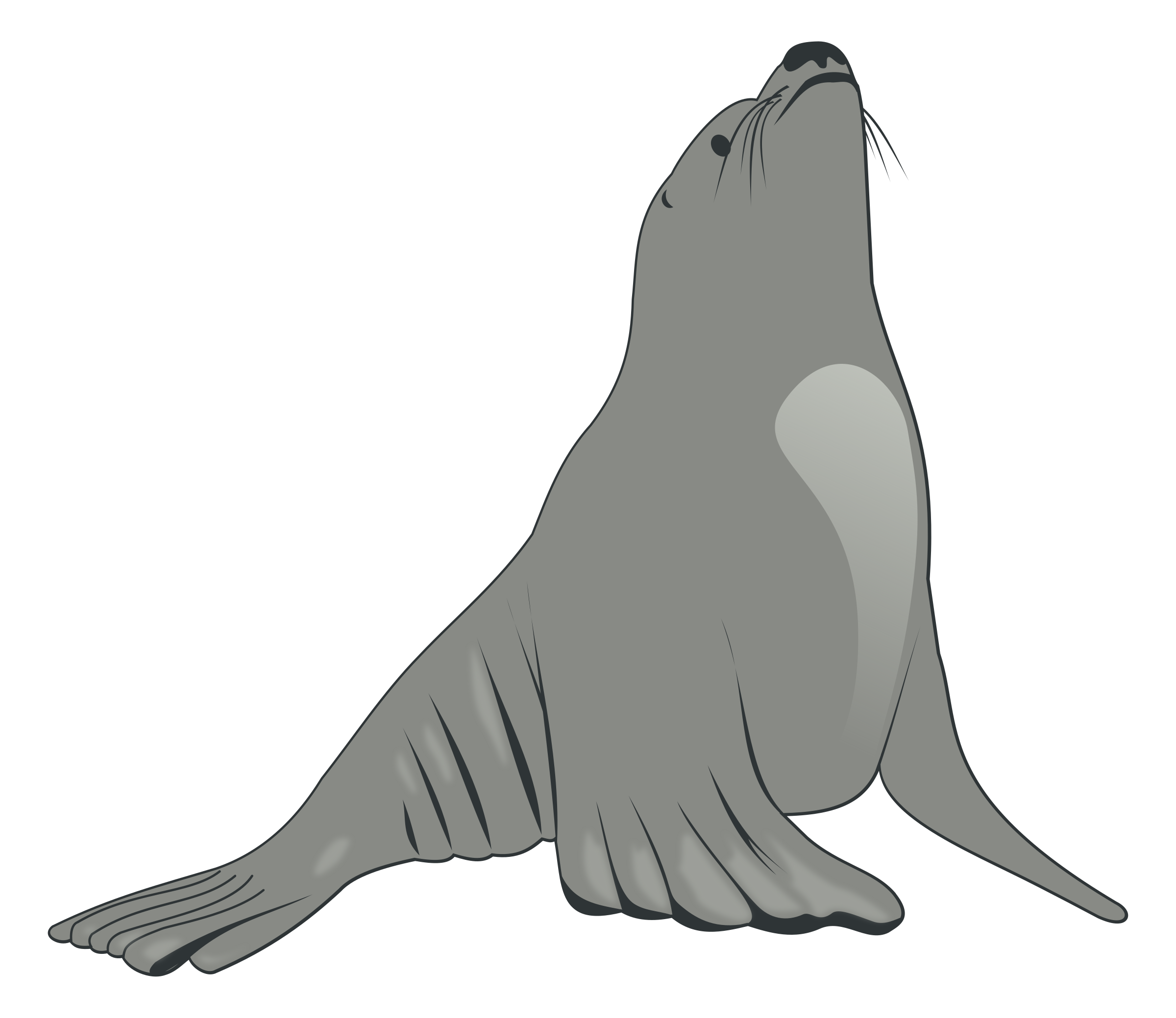 Sea Lion by valessiobrito