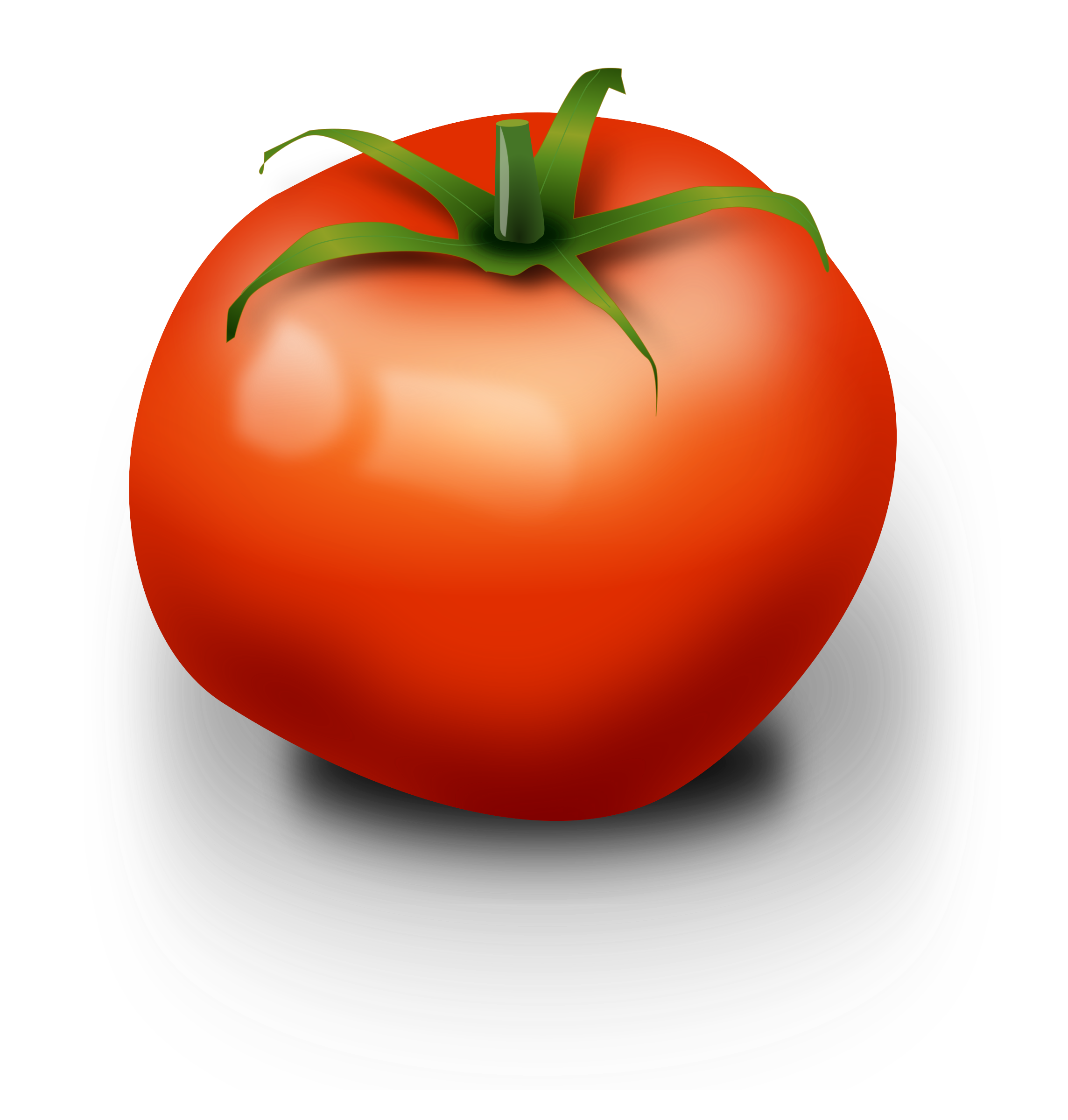 tomato by Chrisdesign