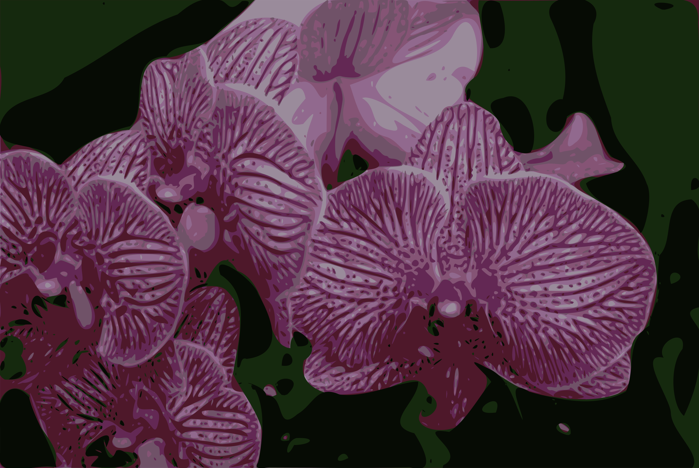 Orchids by J_Alves