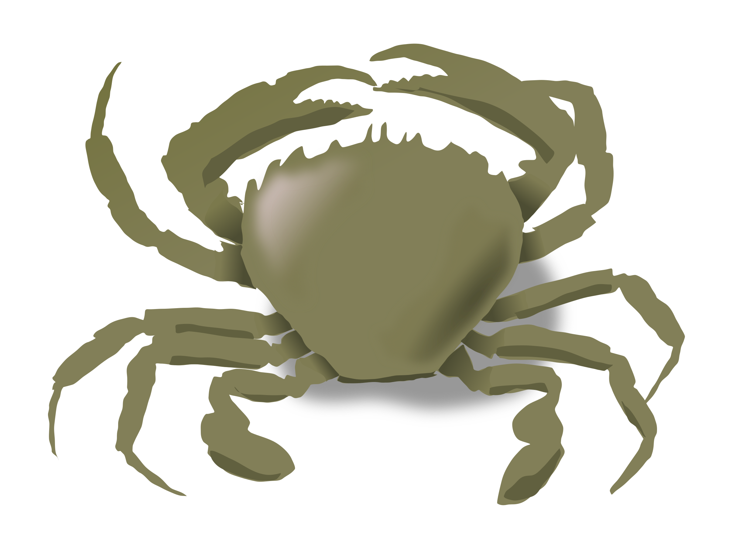 the crab by addon
