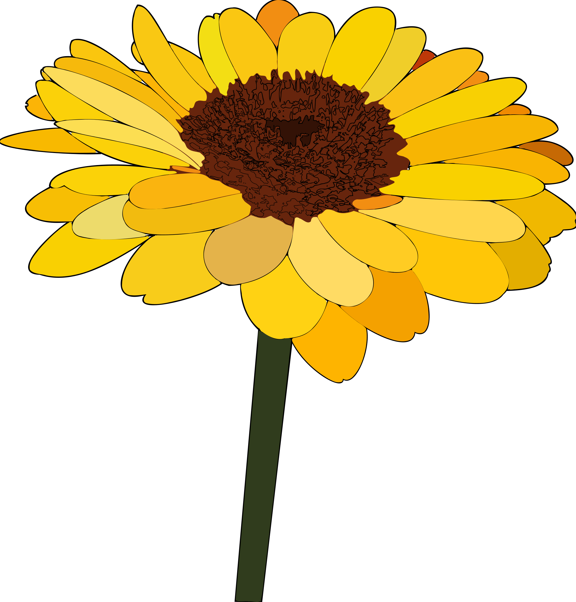 sunflower by tom