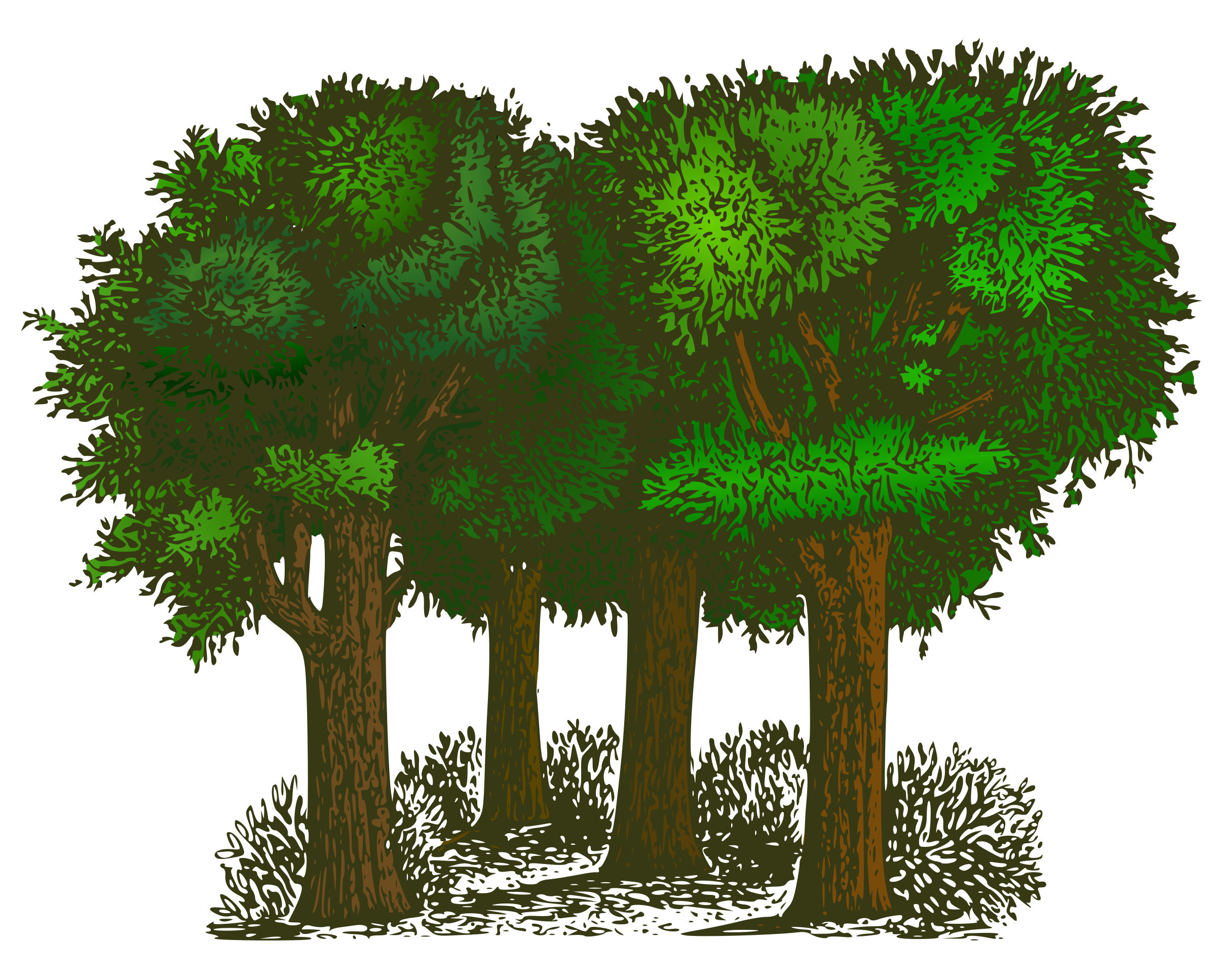 Colorized Group of Trees by eady
