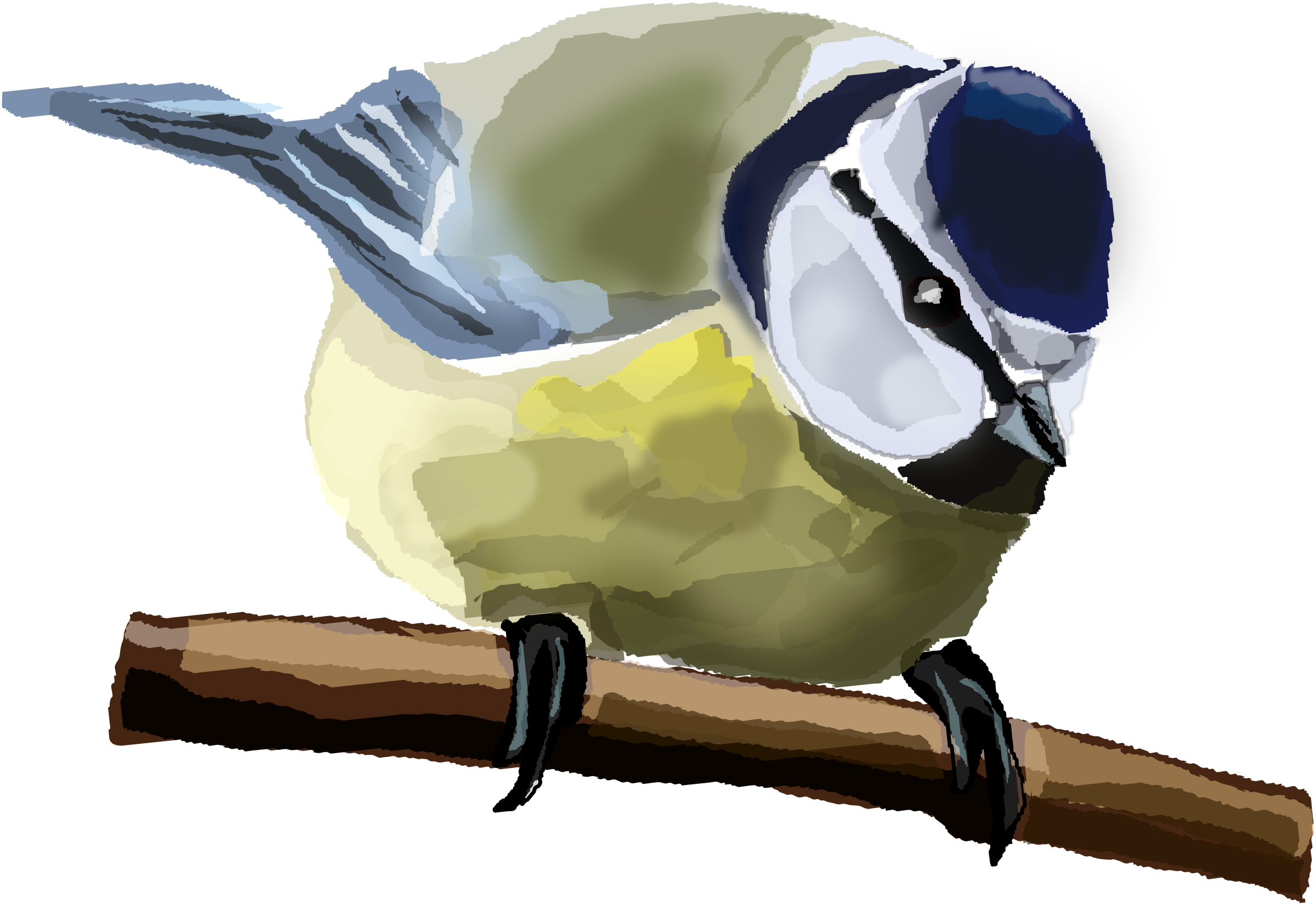 Blue Tit  by Degri