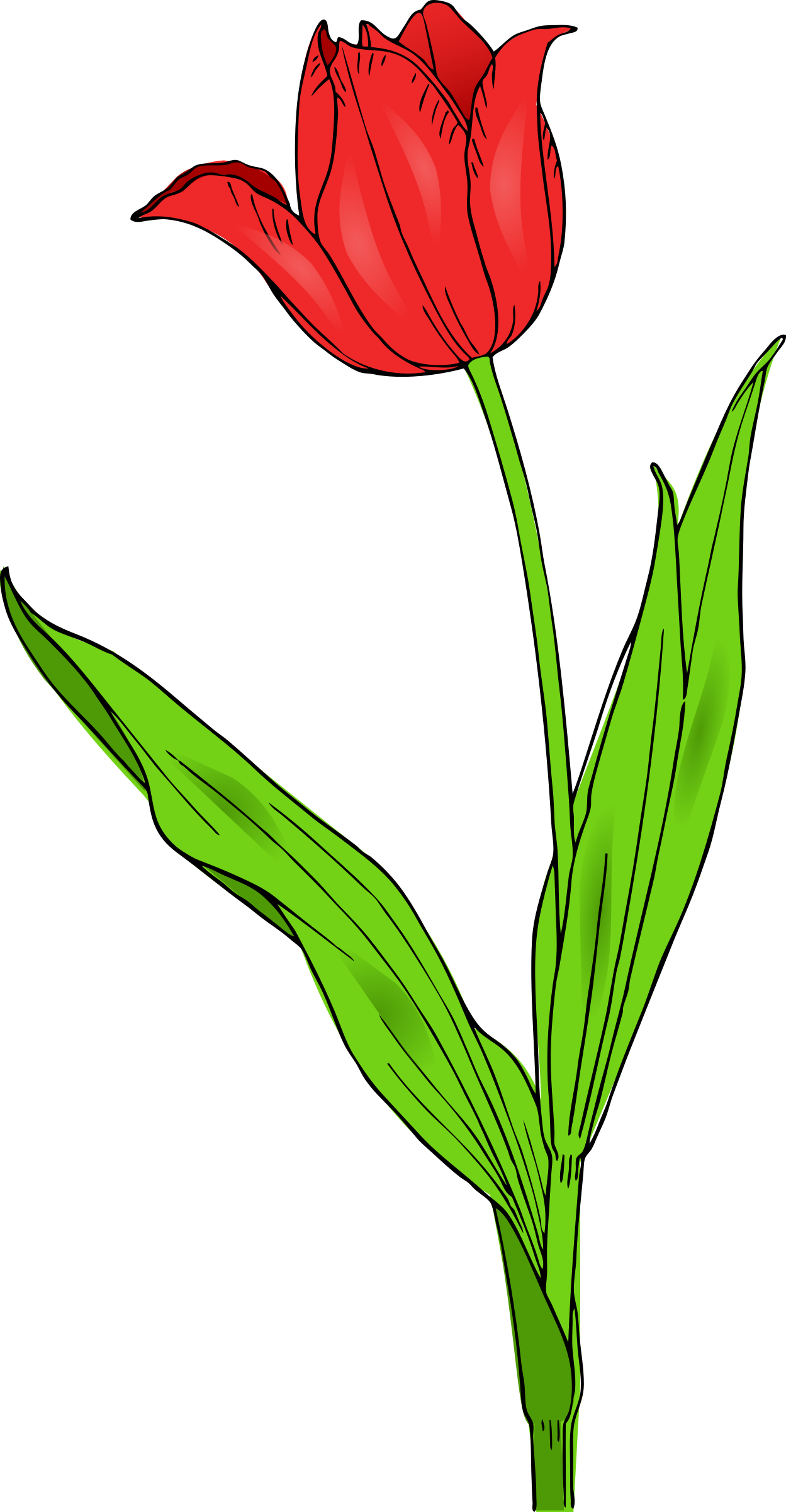 colored tulip by pitr