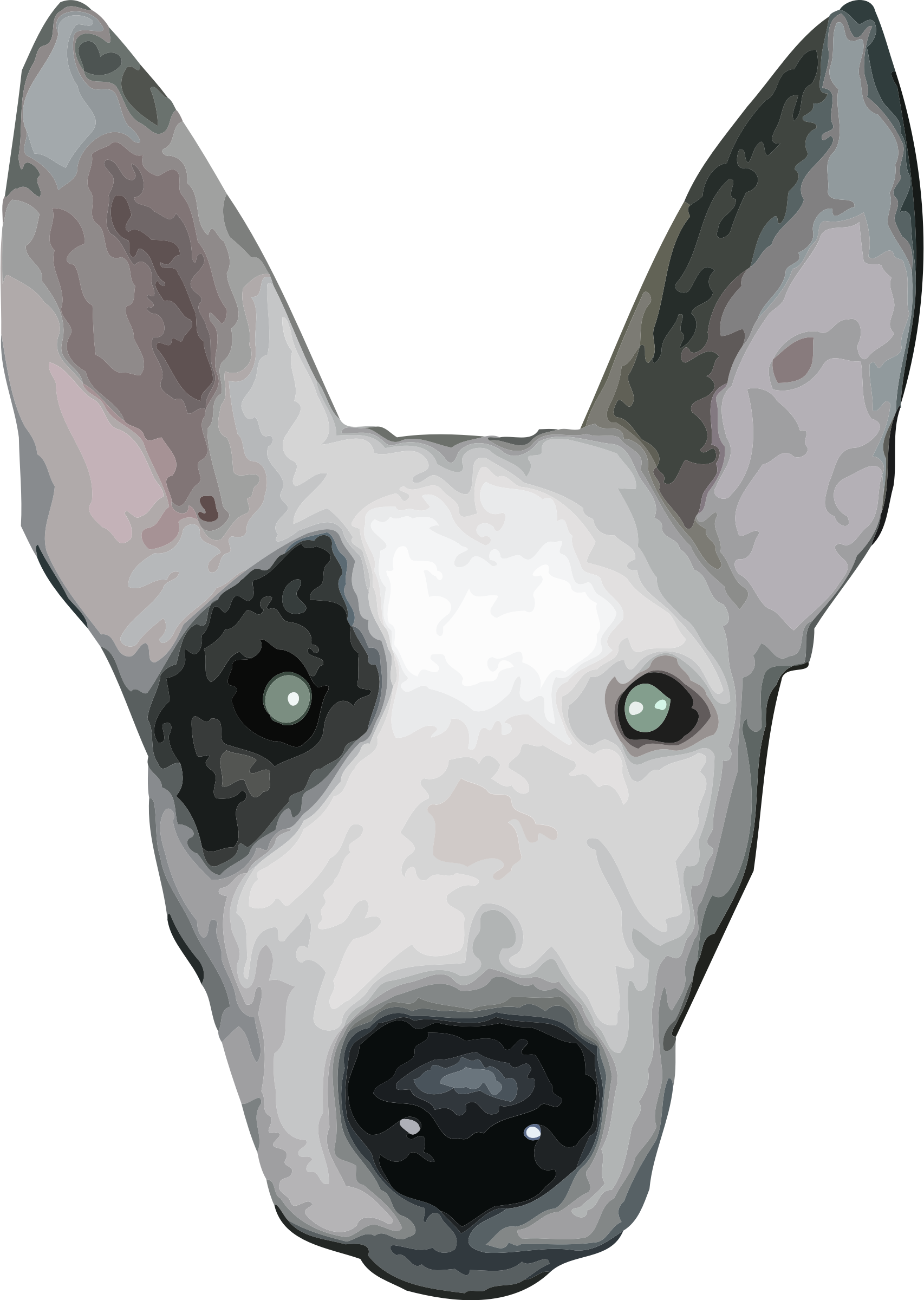 HighRes, Bullterrier head by aungkarns