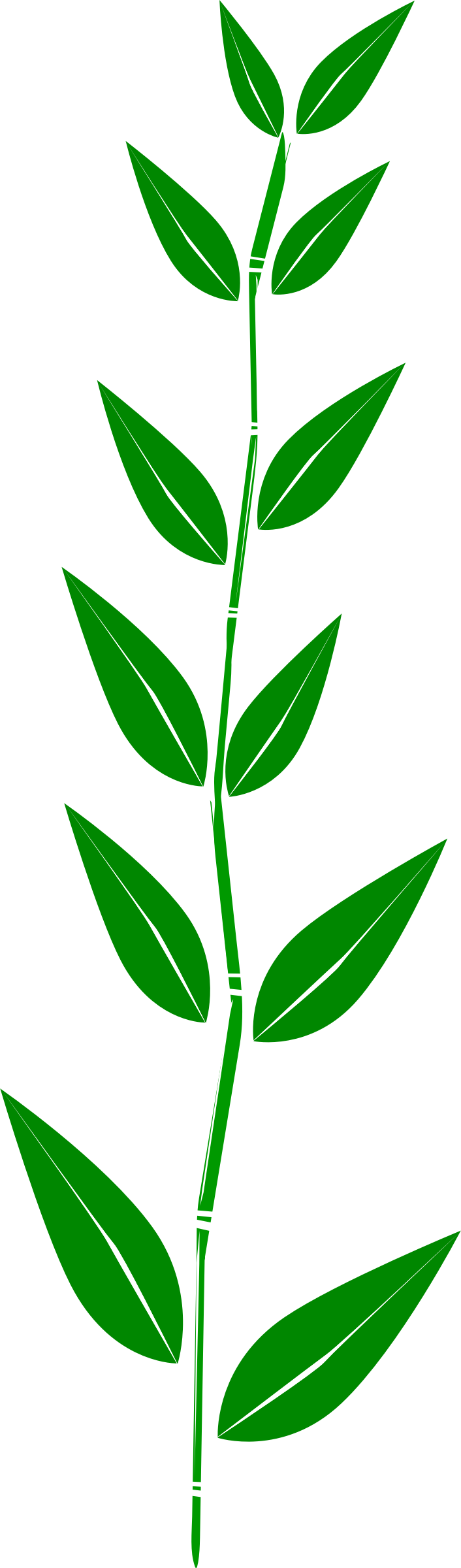 Bamboo,leaf by aungkarns