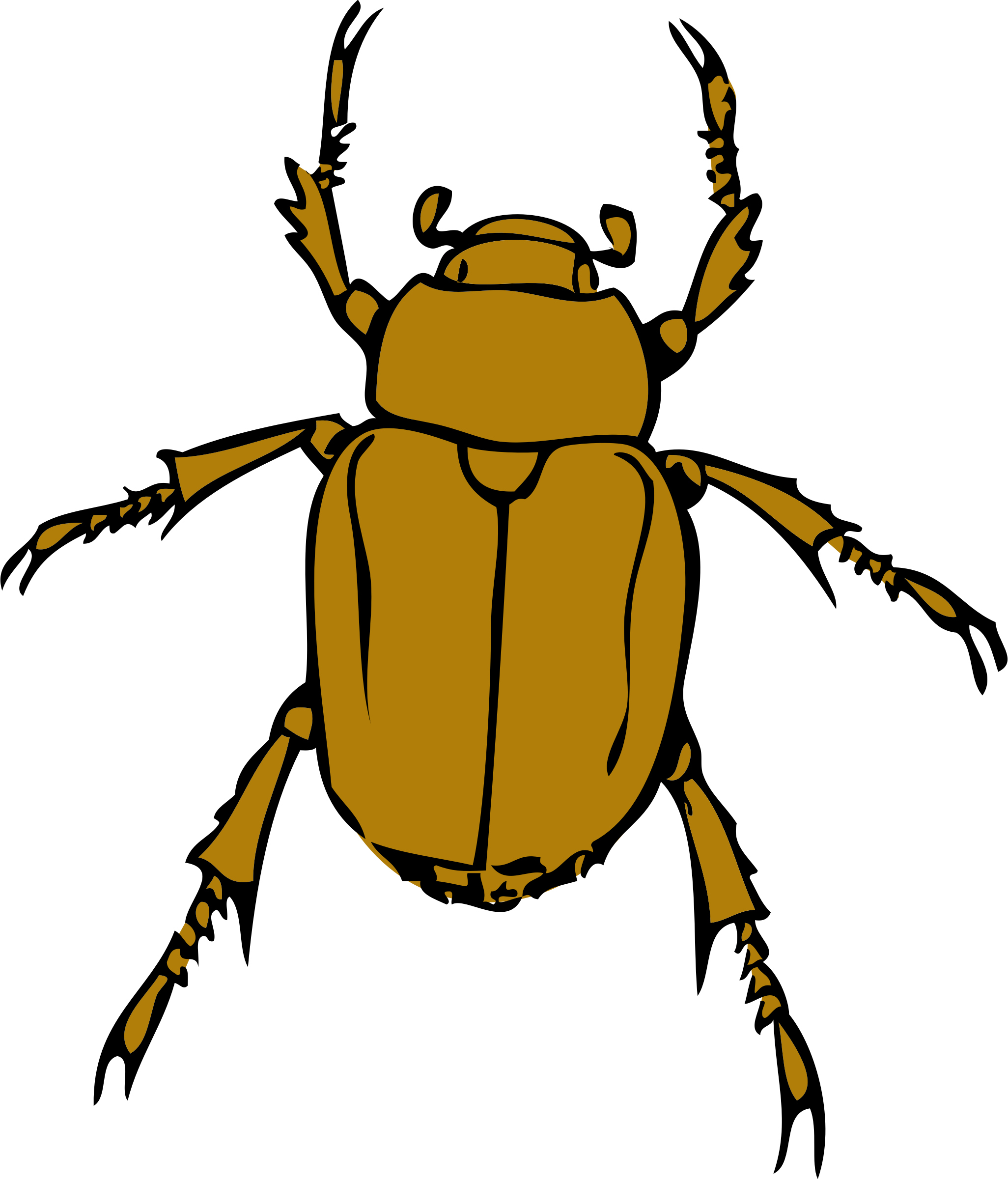 chafer bug by johnny_automatic