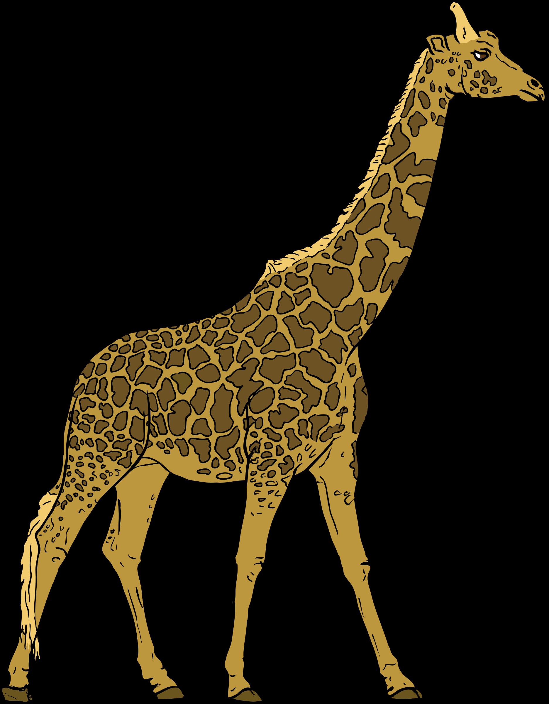 Clipart - Giraffe