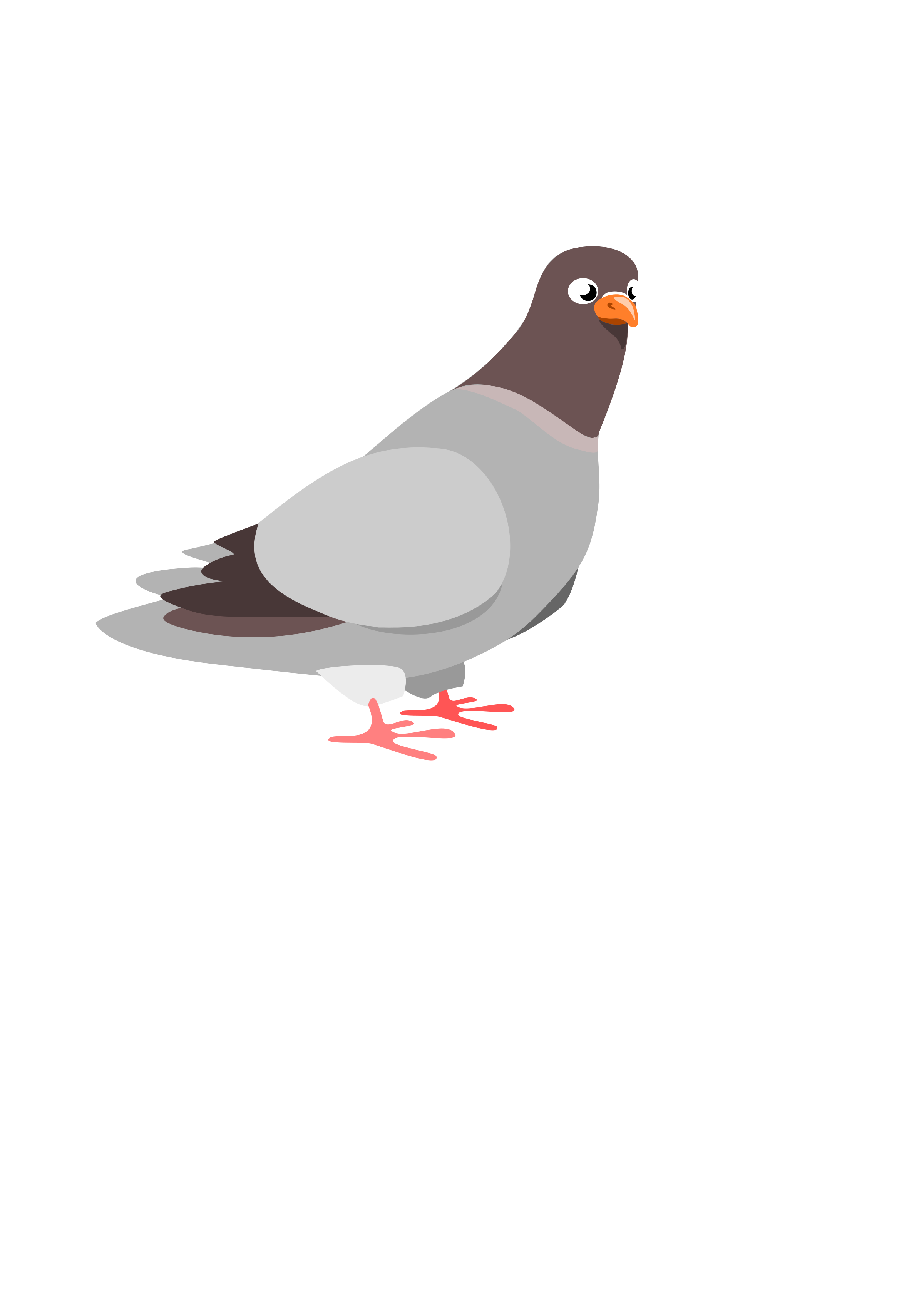 Pigeon by wildchief