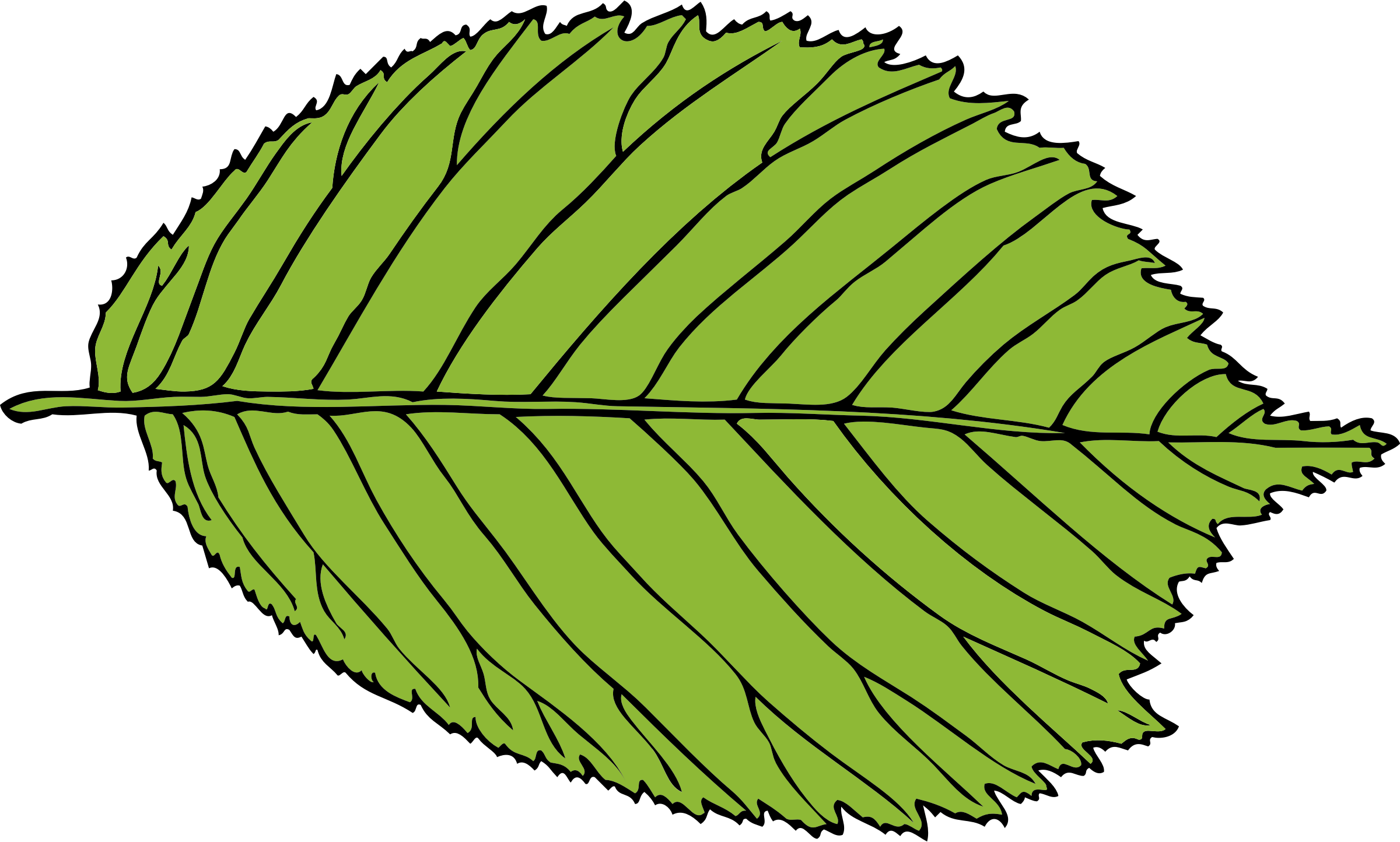 bi-serrate leaf by johnny_automatic
