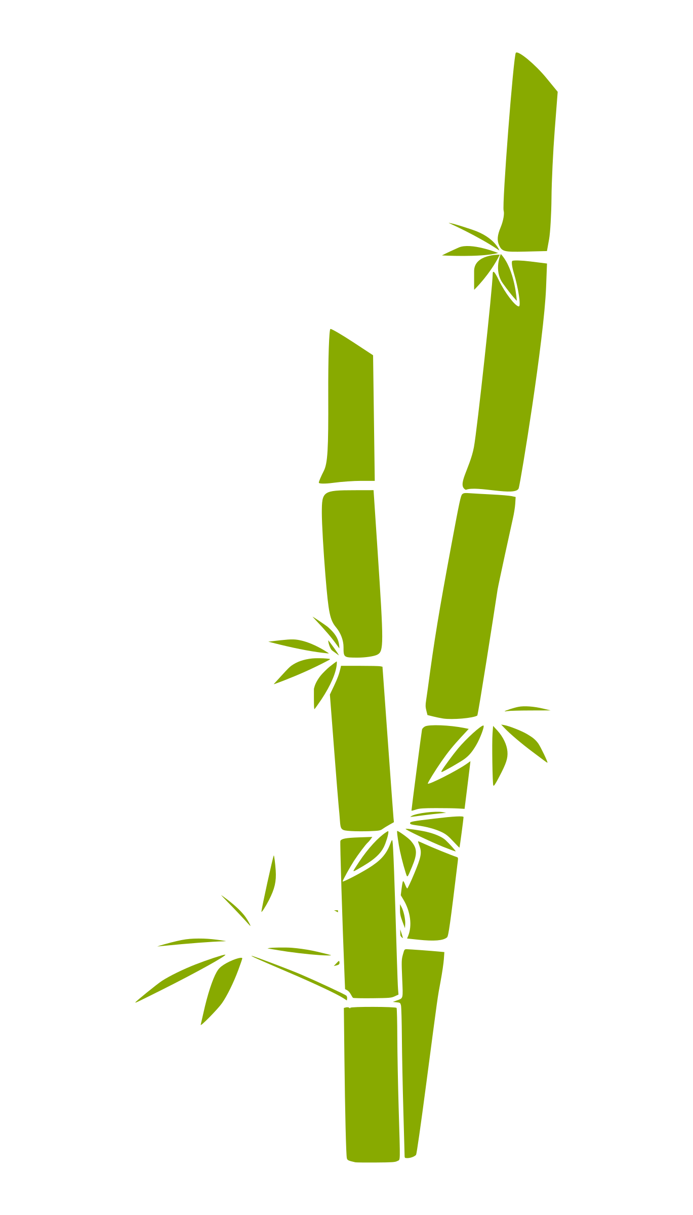 bamboo by a_rdhny