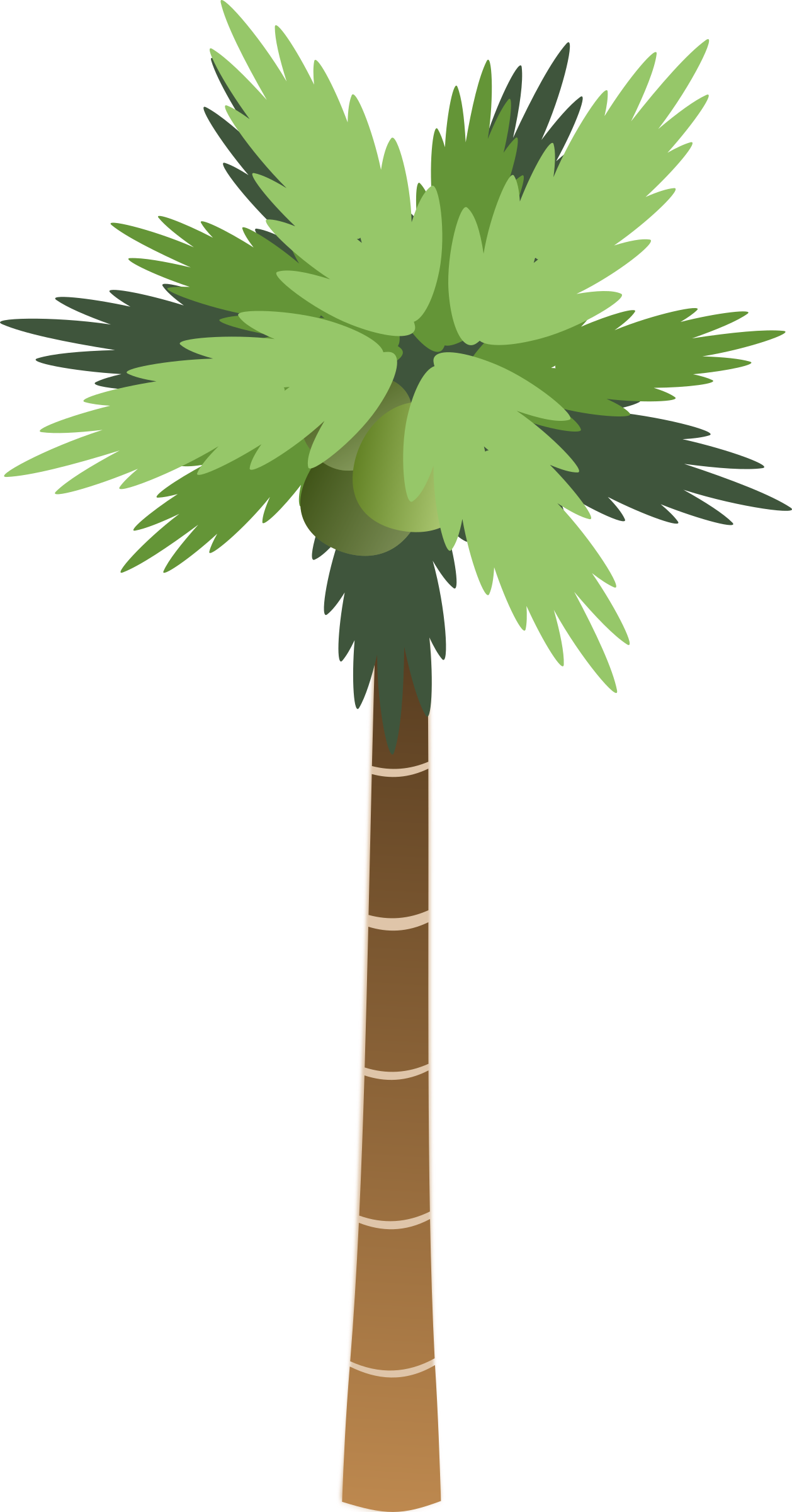 Palm Tree by bsantos
