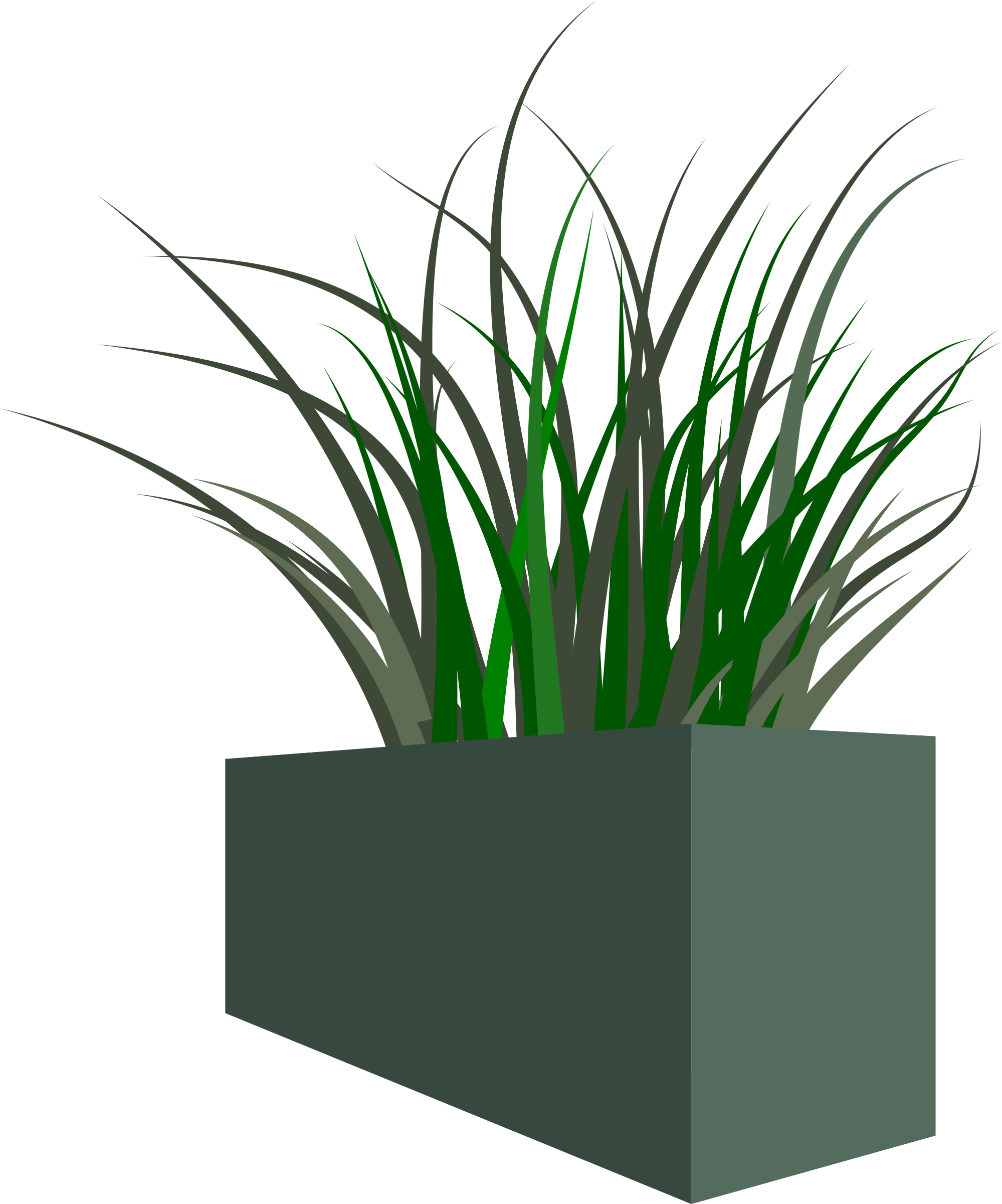 Grass in square planter by stevepetmonkey