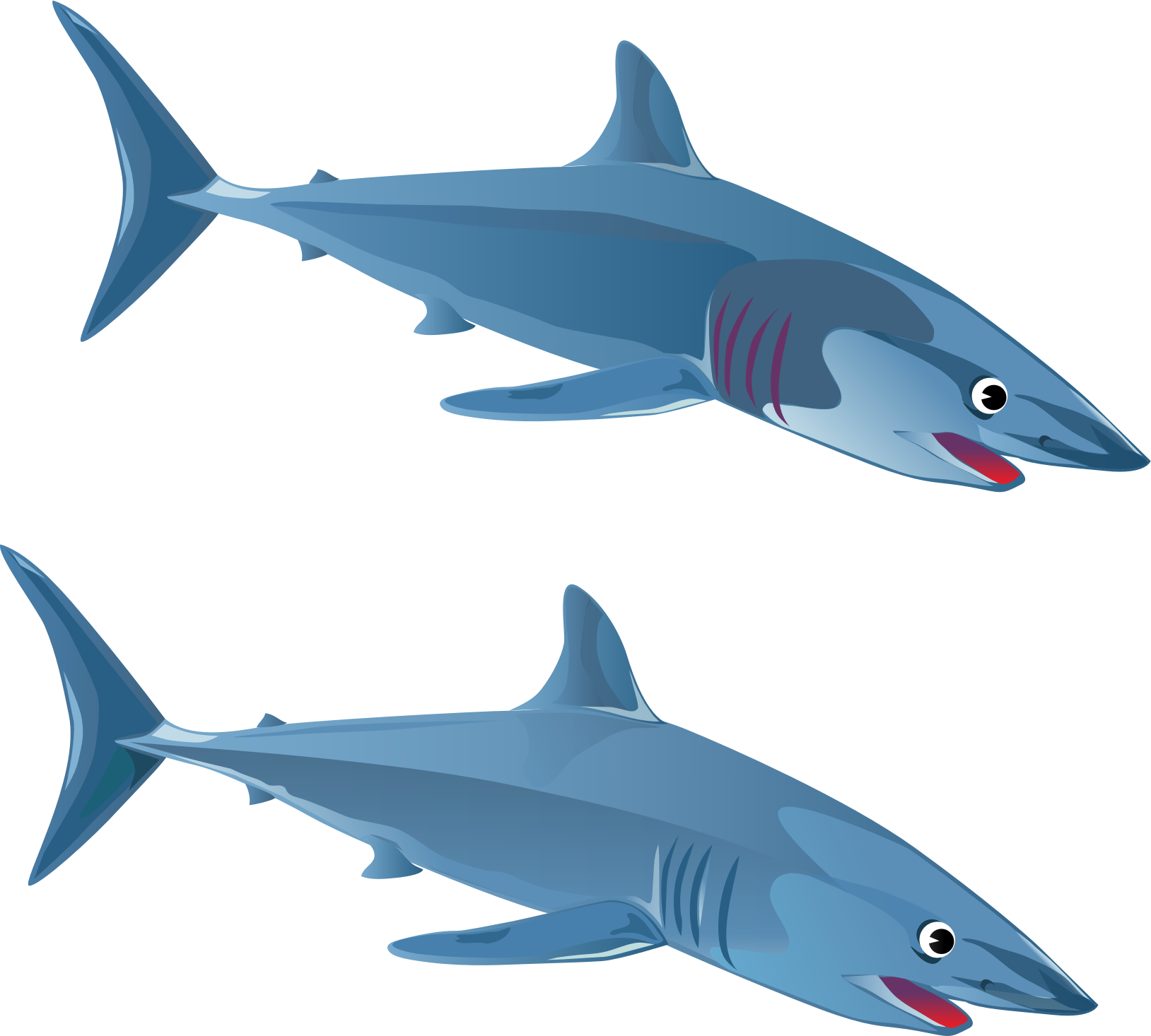 Blue Shark by wildchief