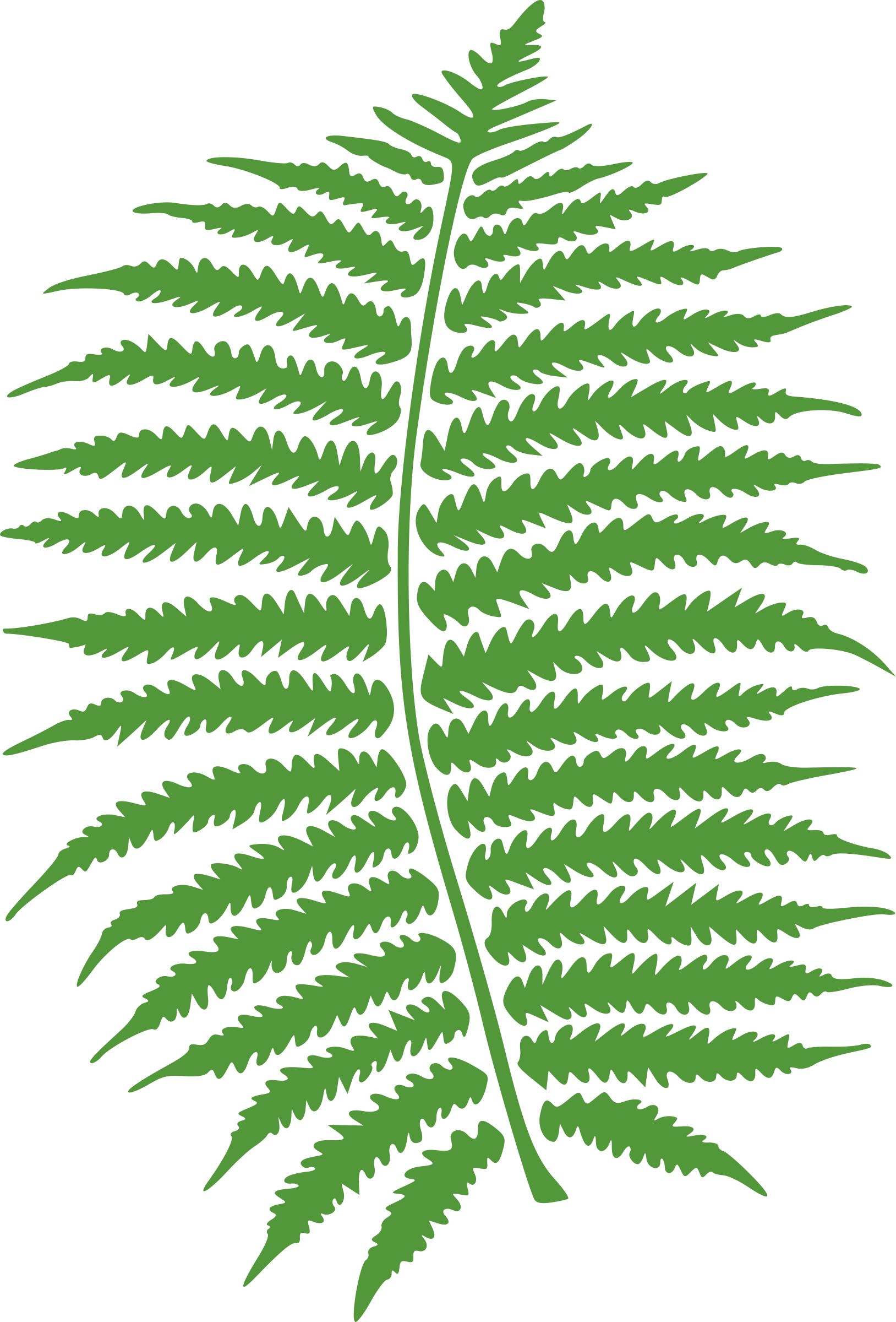 fern by molumen