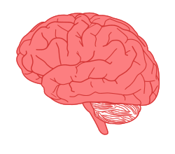 brain in profile by pearish - side view of human brain with colored background layer