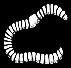 Wurm lineart