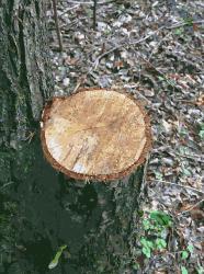 Timber 2015071507