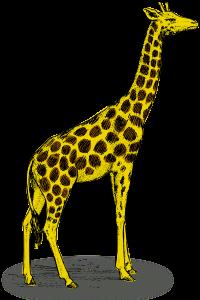 I Girafi