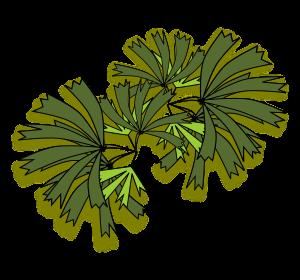 Clipart - Palmeira raphis