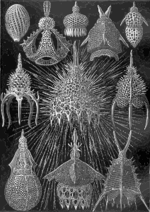 https://openclipart.org/image/300px/svg_to_png/229107/Haeckel_Cyrtoidea.png